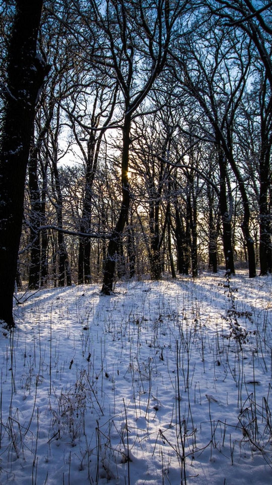 Wallpaper winter, forest, landscape