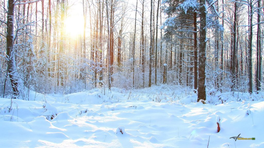 Winter Forest 354950