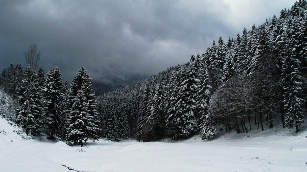 Clouds over snowy forest wallpaper #19361