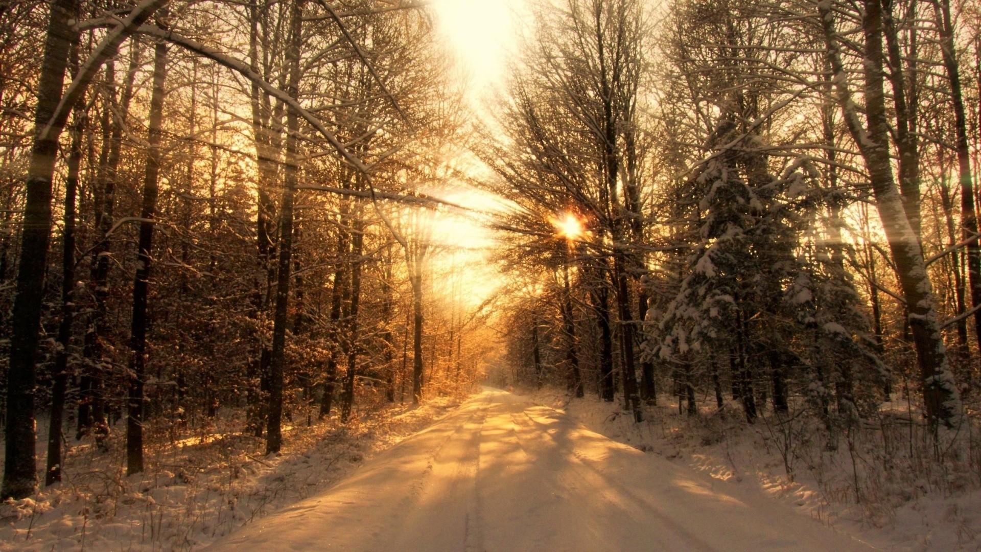 Winter Forest Road & Sun Light