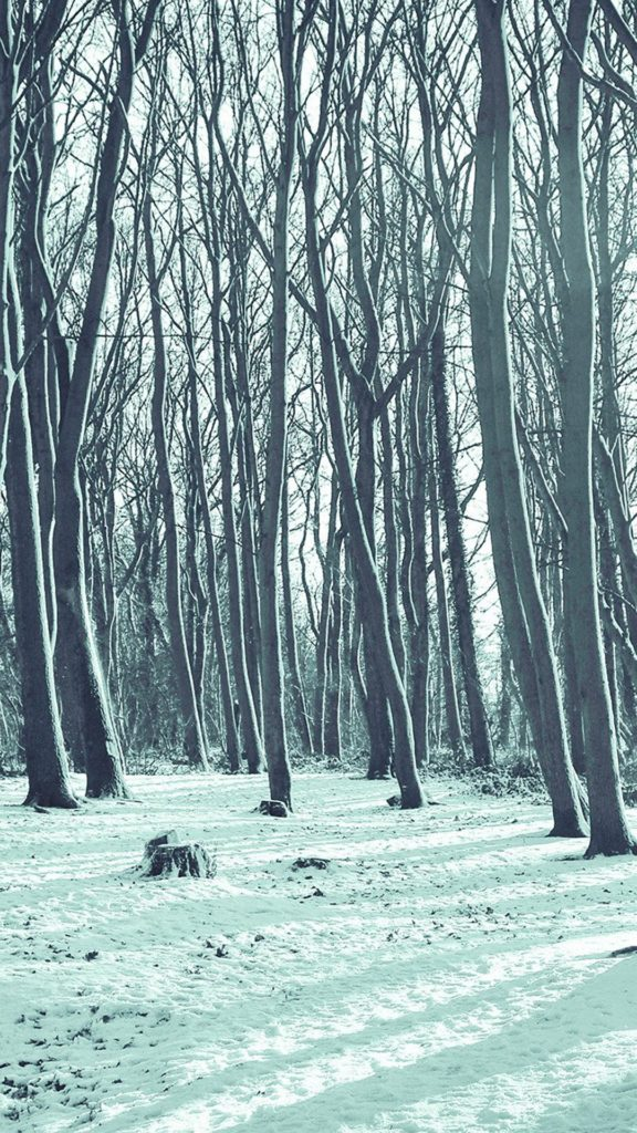 Cold Winter Forest Snow Nature Mountain Blue iPhone 6 wallpaper