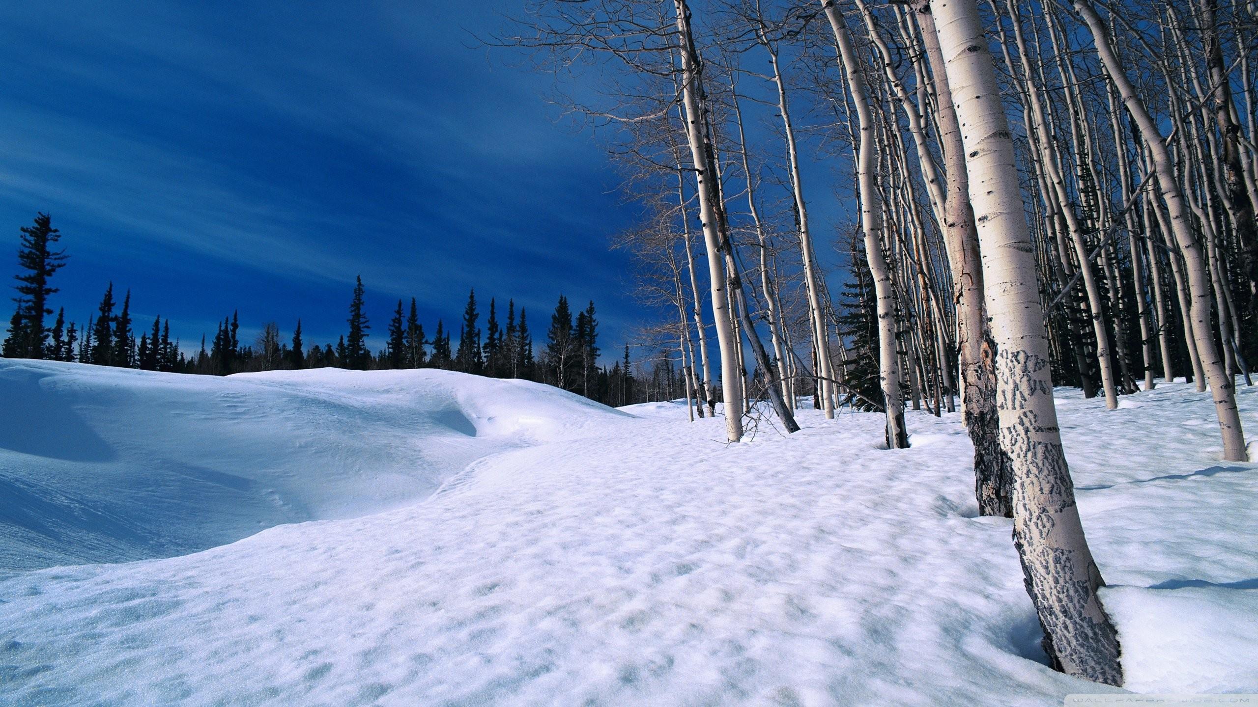 Winter Scenes Screensavers …