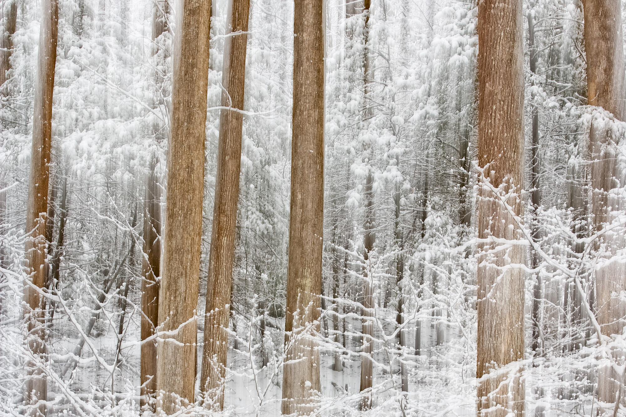 Winter Silence Wallpaper