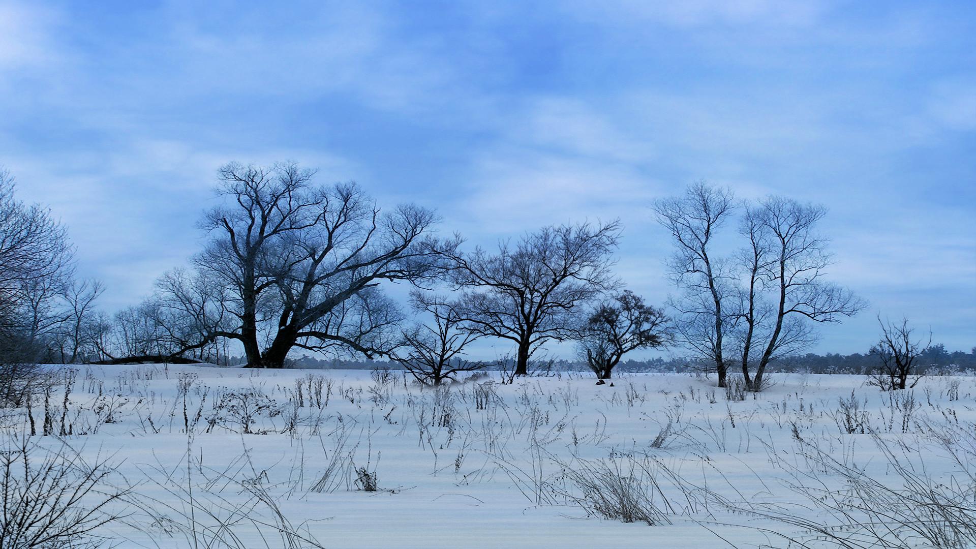 Logonstudio Screensavers Explore Trees Winter wallpapers HD free .