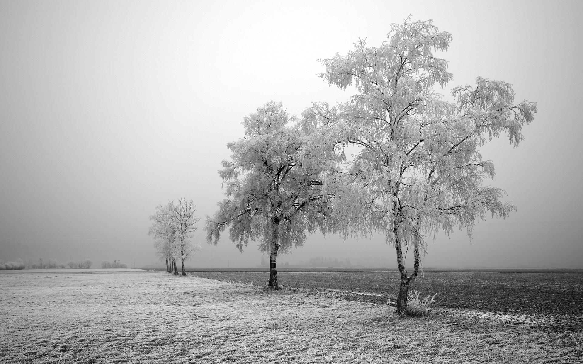 Frozen field and trees – winter wallpaper