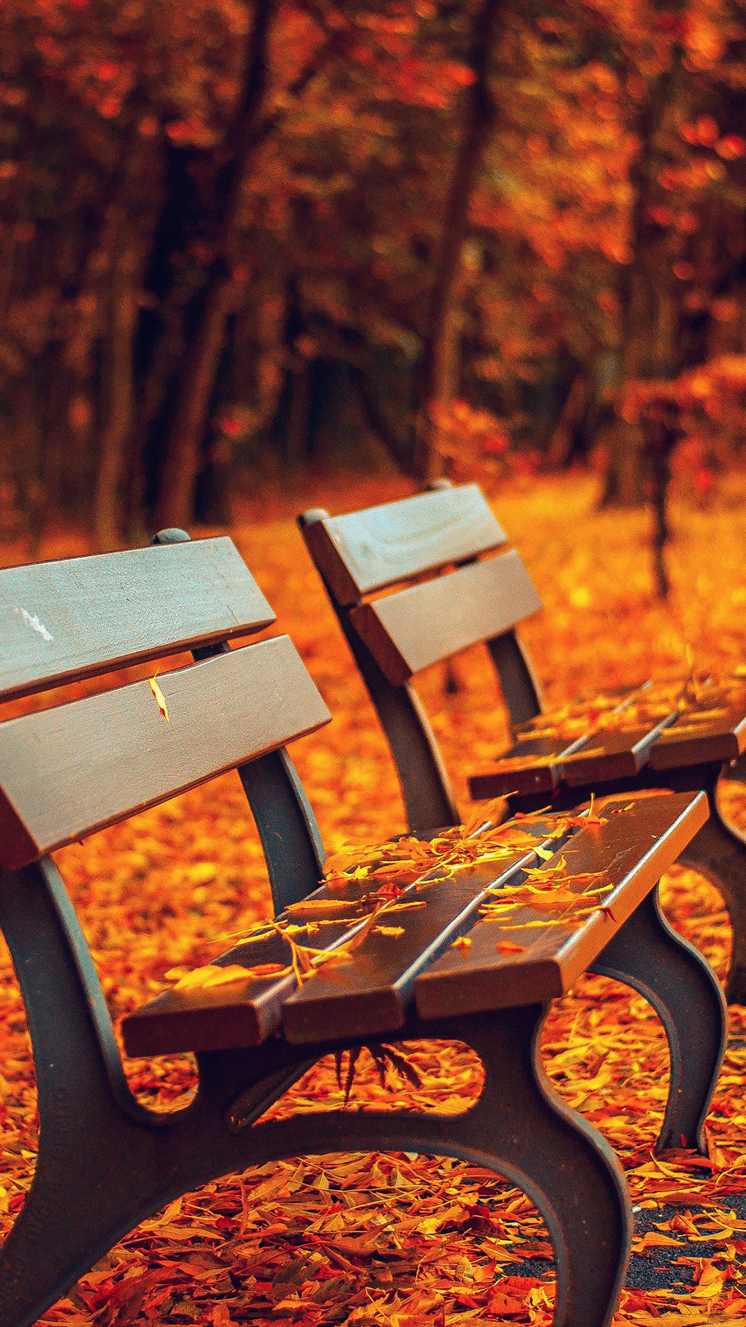 Nature Autumn Fall Leaves On Roadside Bench iPhone 6 Wallpaper .