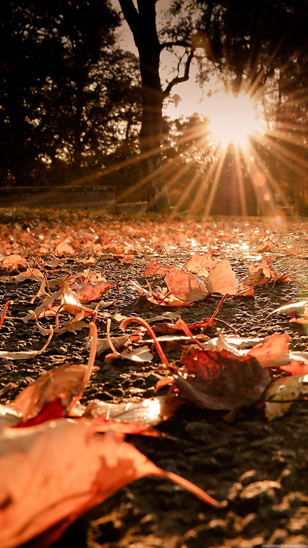 Nature iPhone 6 Plus Wallpapers – Autumn Leaves On The Ground Sunset iPhone  6 Plus HD
