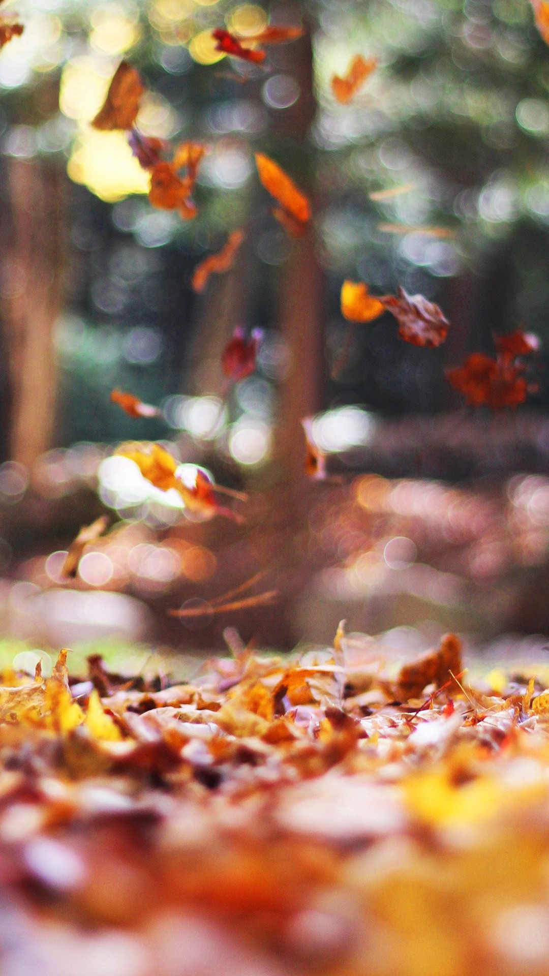 Fall Leaves Nature Tree Year Sad iPhone 6 wallpaper