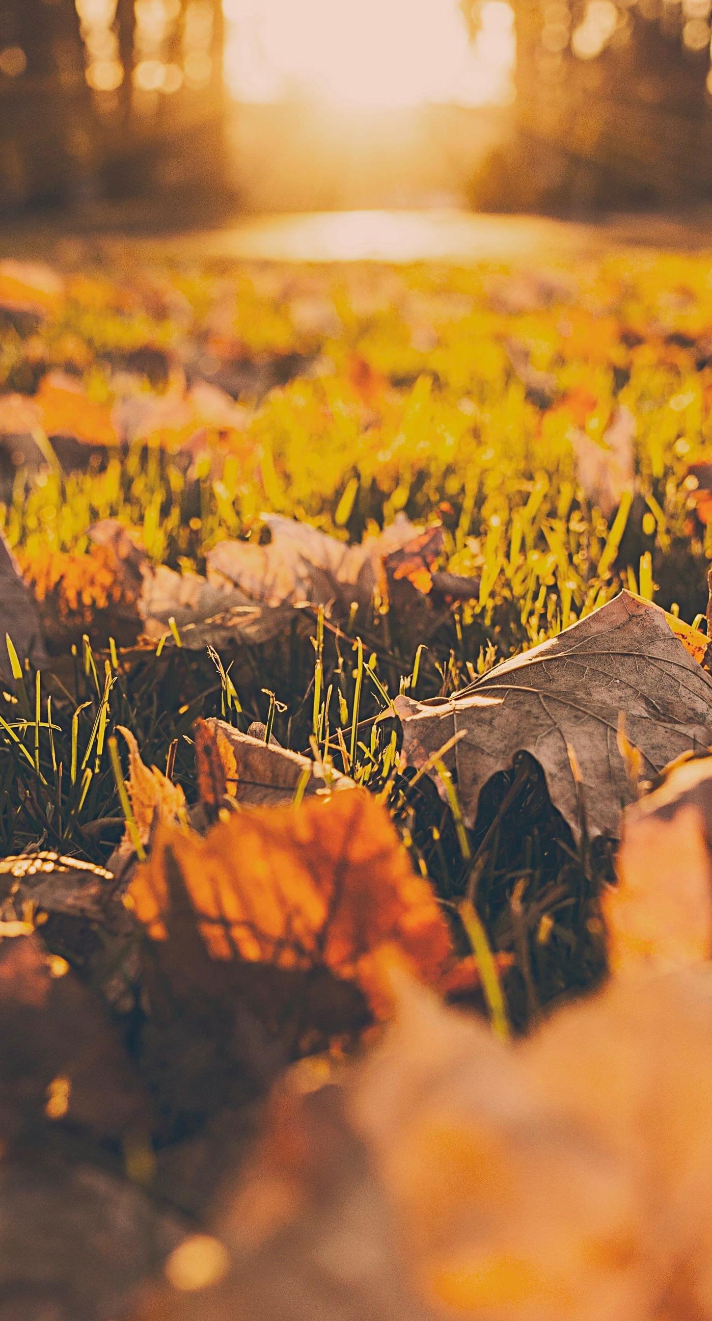 Landscape dead leaves fall blur iPhone6s Plus / iPhone6 Plus Wallpaper
