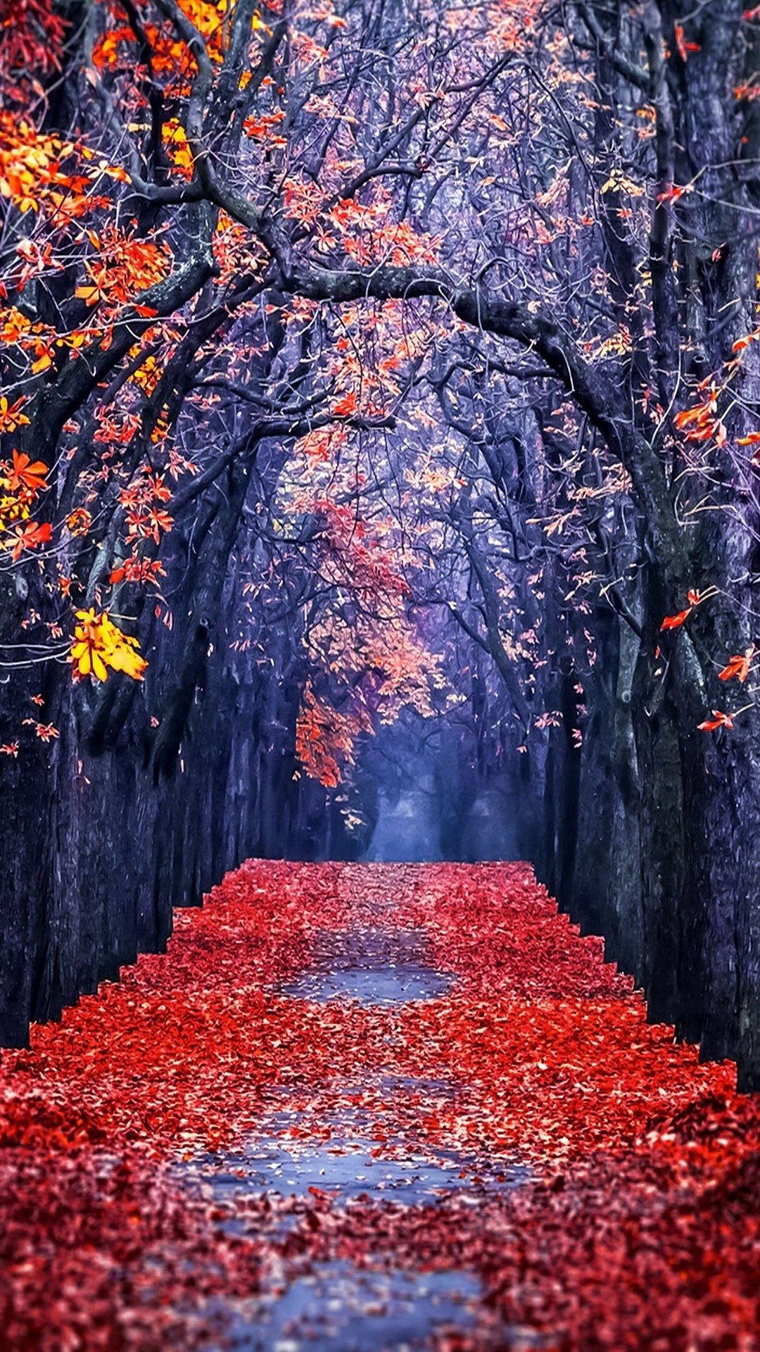 Gallery of autumn leaves in frost wallpapers and images wallpapers pictures