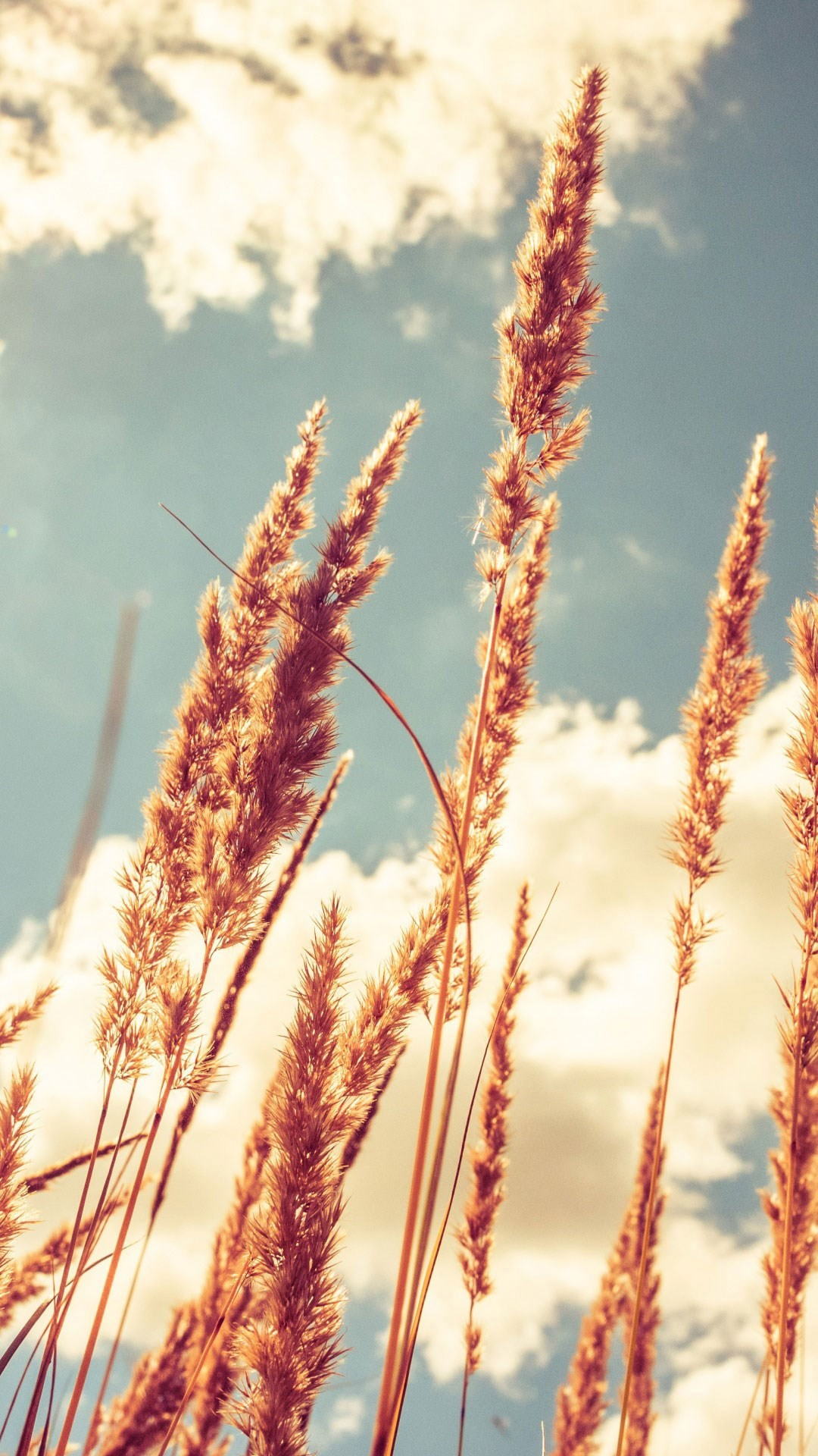 Rice plant wallpapers for free download about (67) wallpapers.