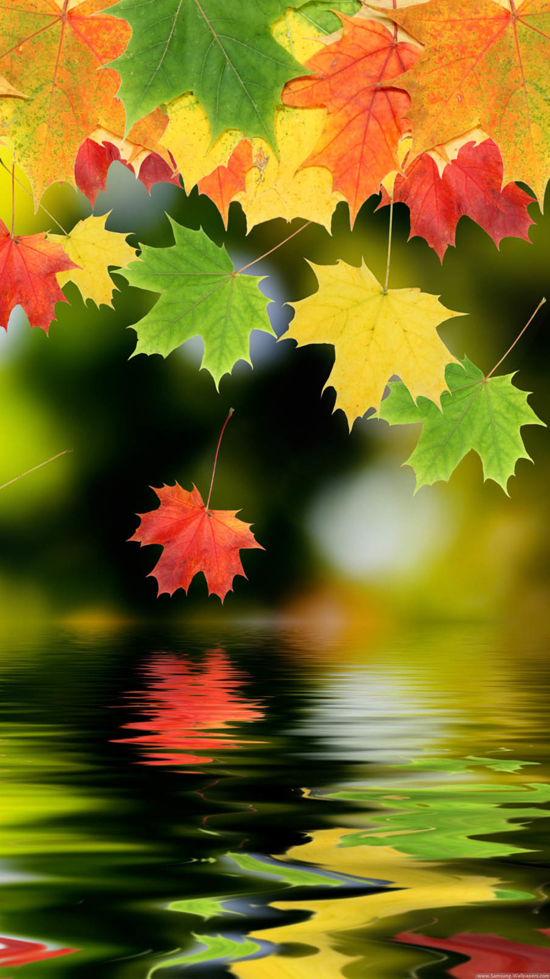 Colorful Autumn Maple Leafs iPhone 6 Plus HD Wallpaper …