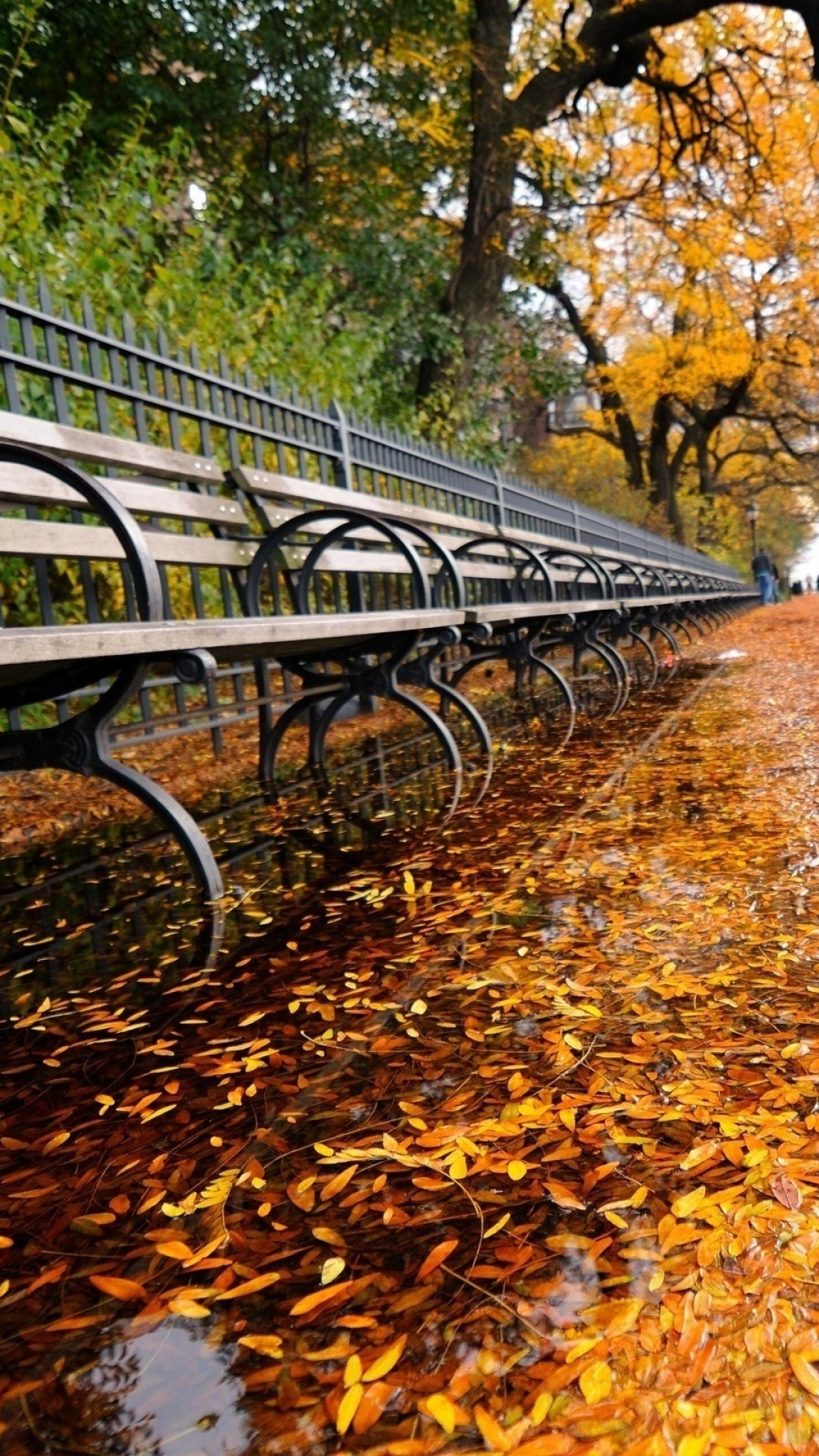 Fall Leaves iPhone 6 Plus preview Fall Leaves Bench iPhone 6 Plus prevew