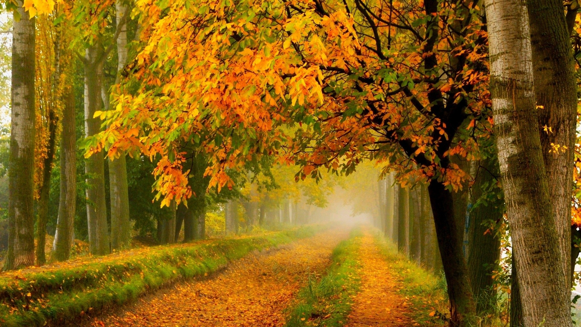 Colorful Autumn Fall Forest Park Wallpaper [1920 x 1080] Need #iPhone #6S