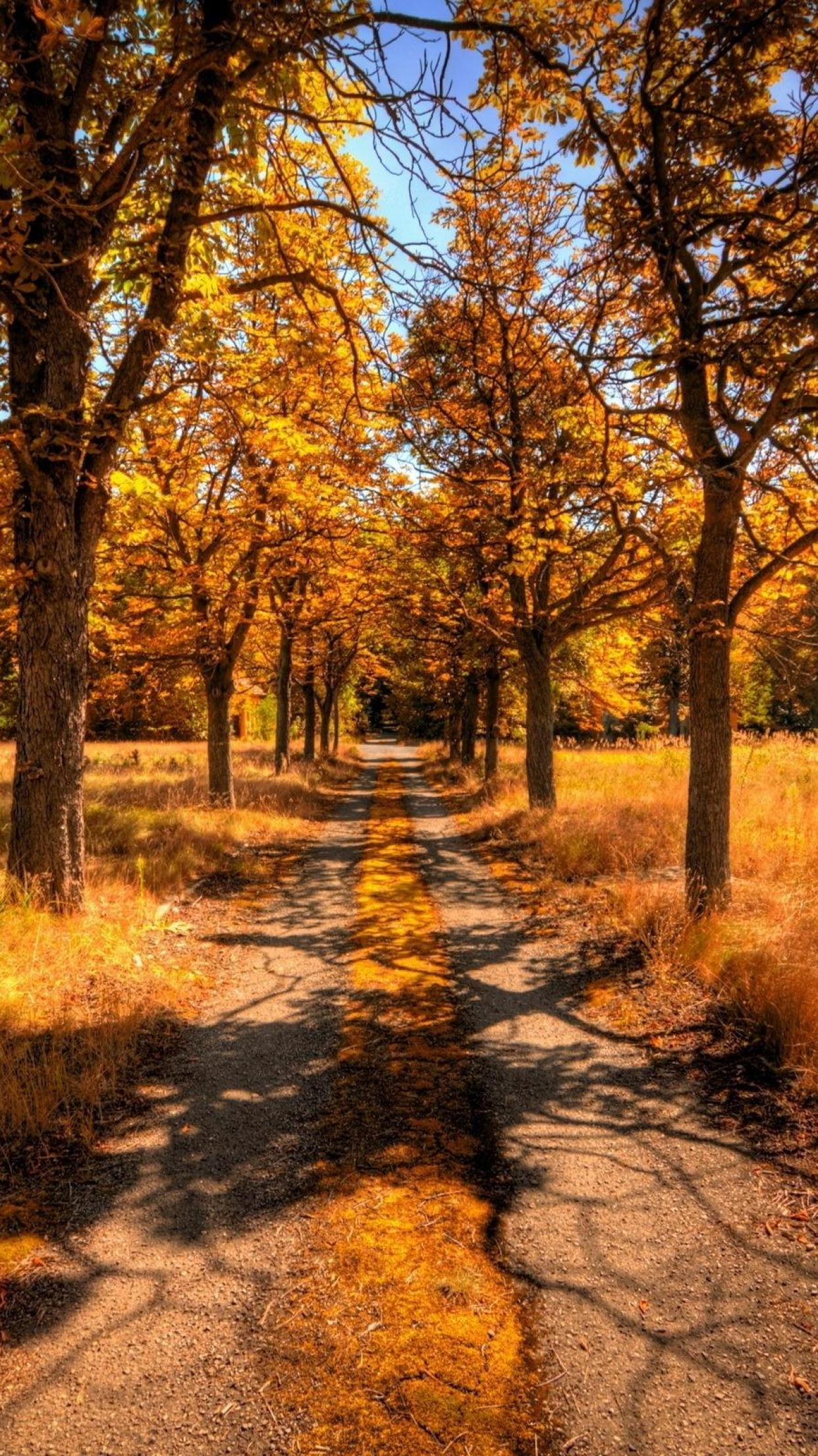 Best Fall iPhone HD Images.
