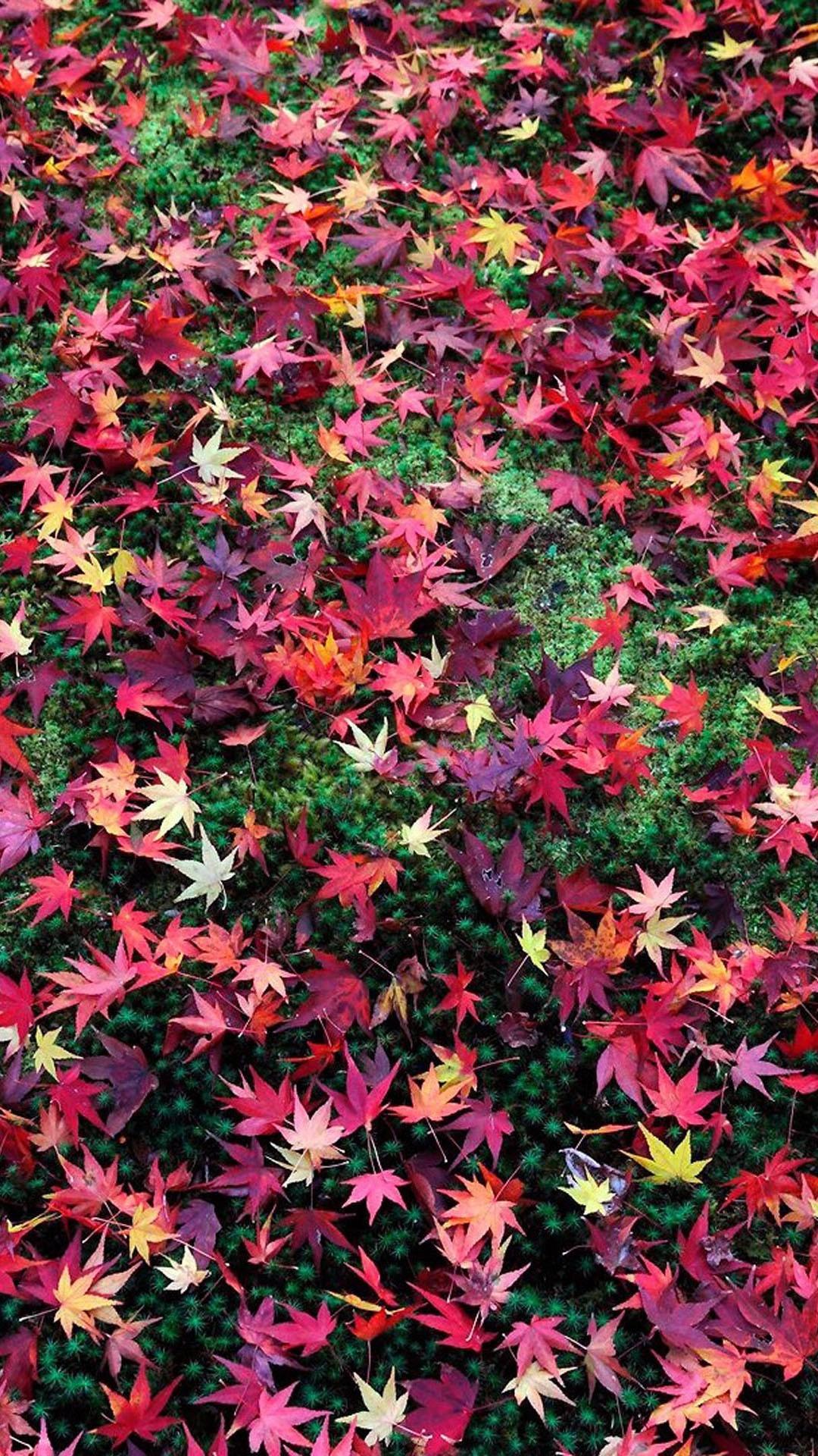 1464684203038371.jpg (1080×1920) | Japanese iphone wallpaper | Pinterest