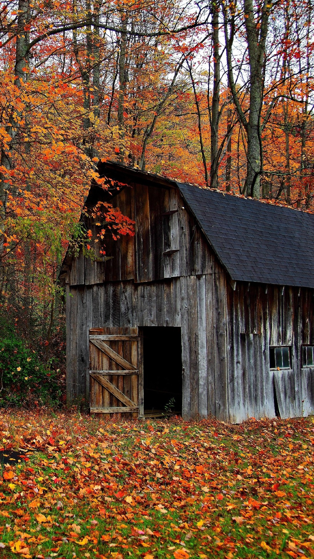 Iphone wallpaper Autumn cabin in the wood …