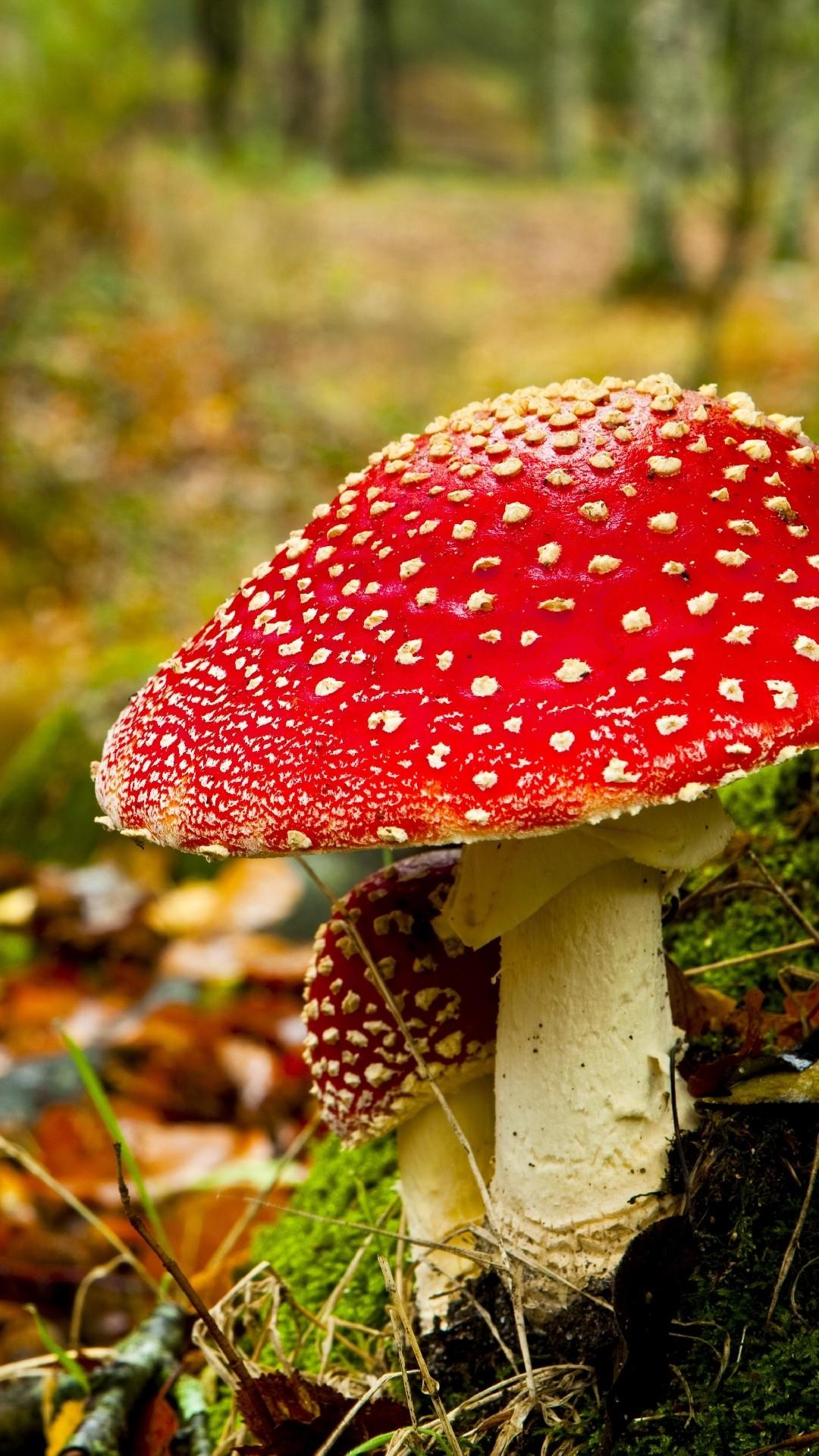 Iphone wallpaper Mushroom in Fall …