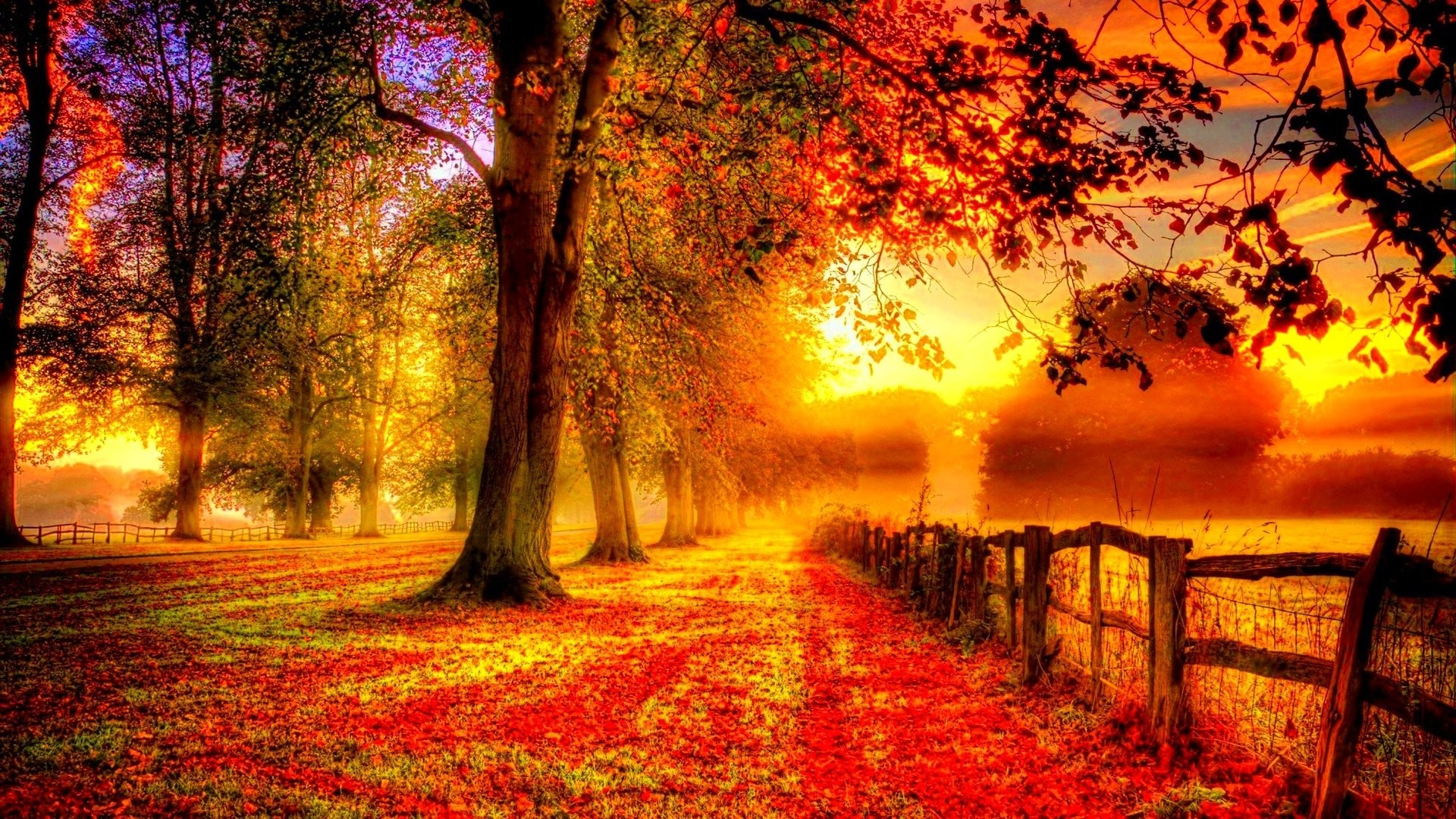 Forest Color Fall Season Autumn Landscape Tree Nature Hd Wallpapers For Iphone  6 – 1920×1080