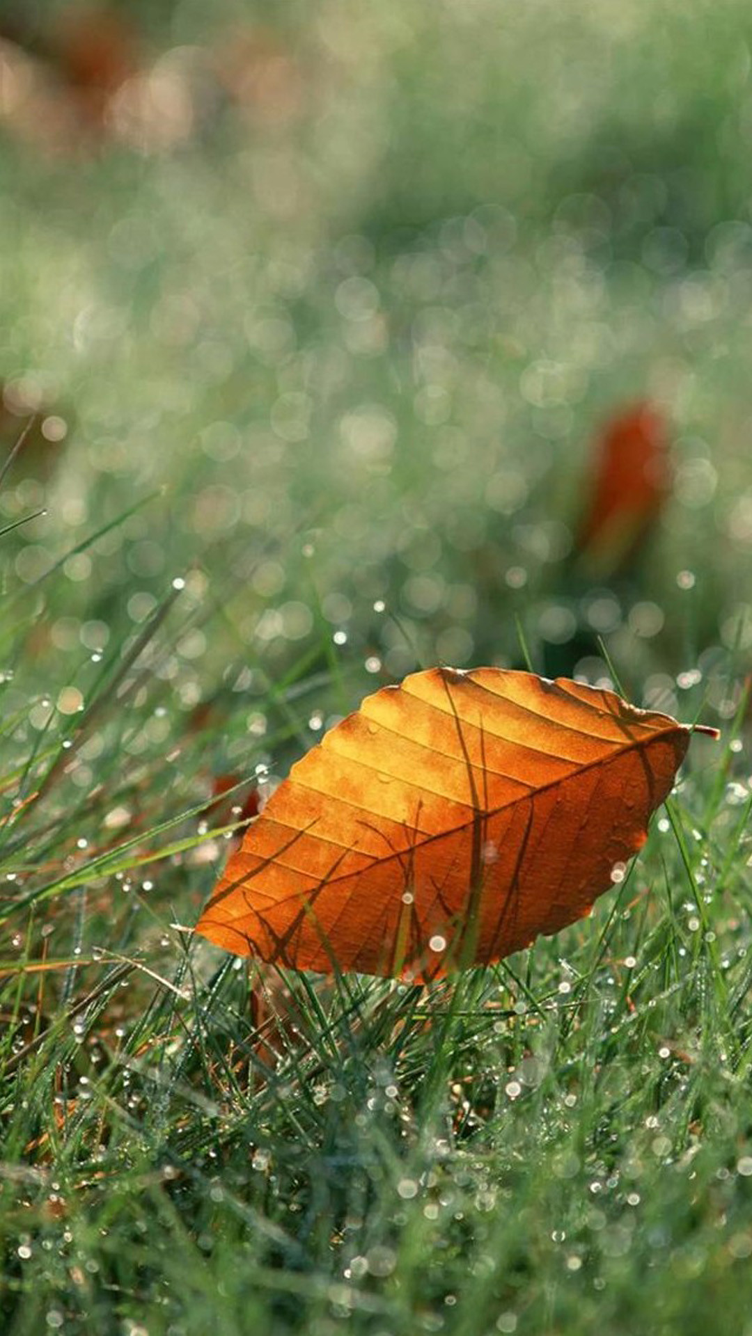 Brown Fall Leaf On Dew Grassland #iPhone #6 #plus #wallpaper