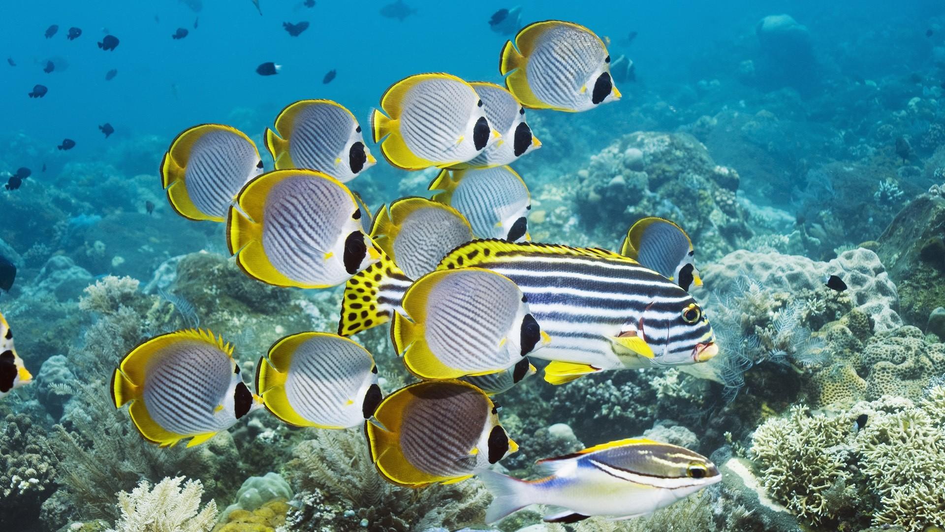 Preview wallpaper underwater, swim, ocean, coral, fish 1920×1080