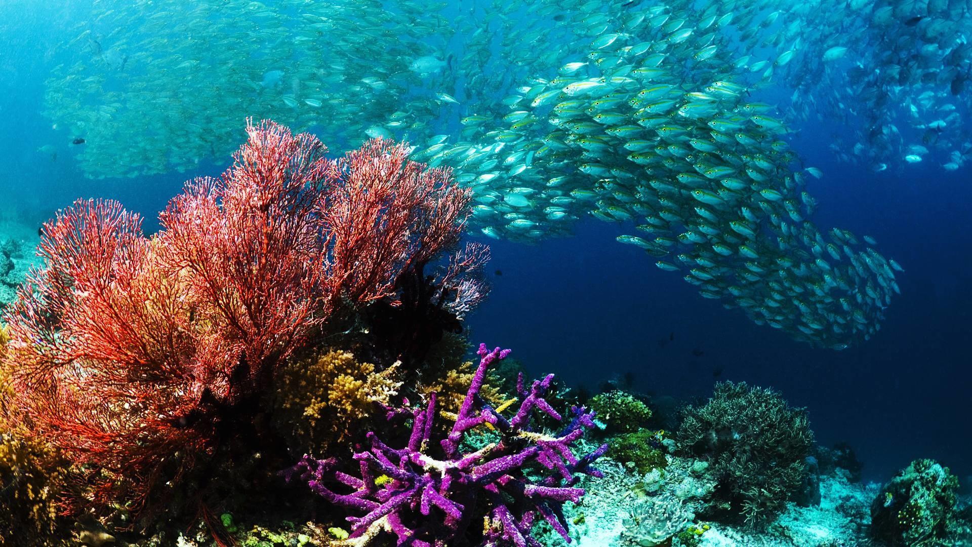 Underwater Ocean Wallpaper Picture