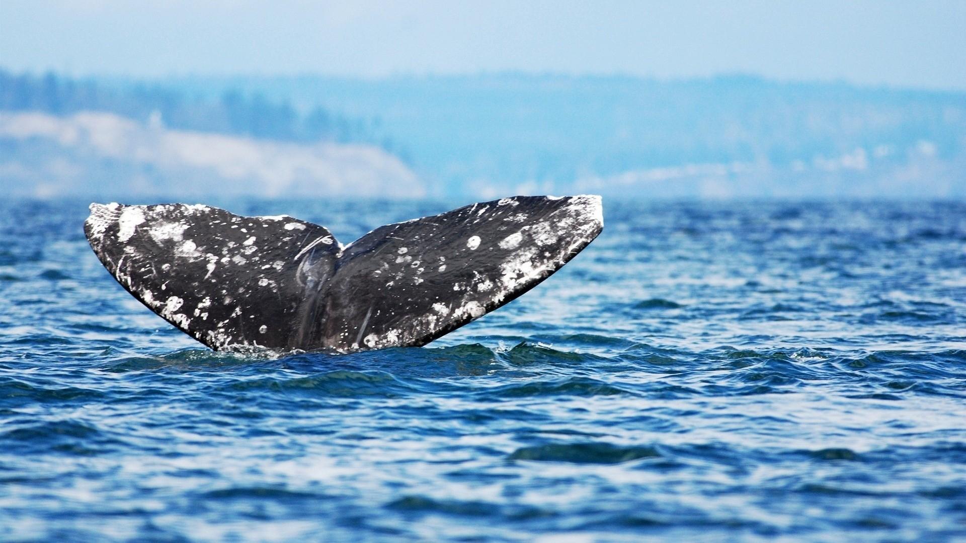 Preview wallpaper whale, jump, sea, ocean, sky 1920×1080