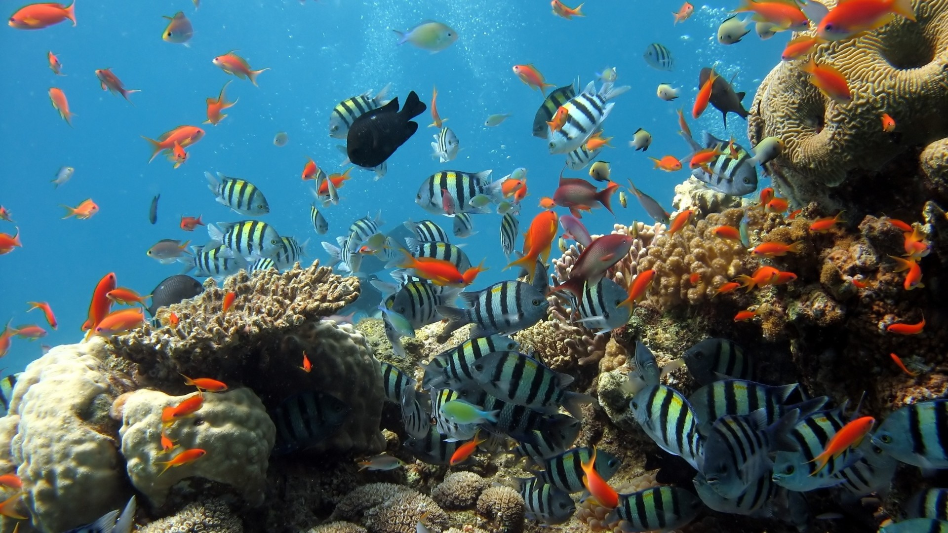 Preview wallpaper underwater, ocean, fish 1920×1080