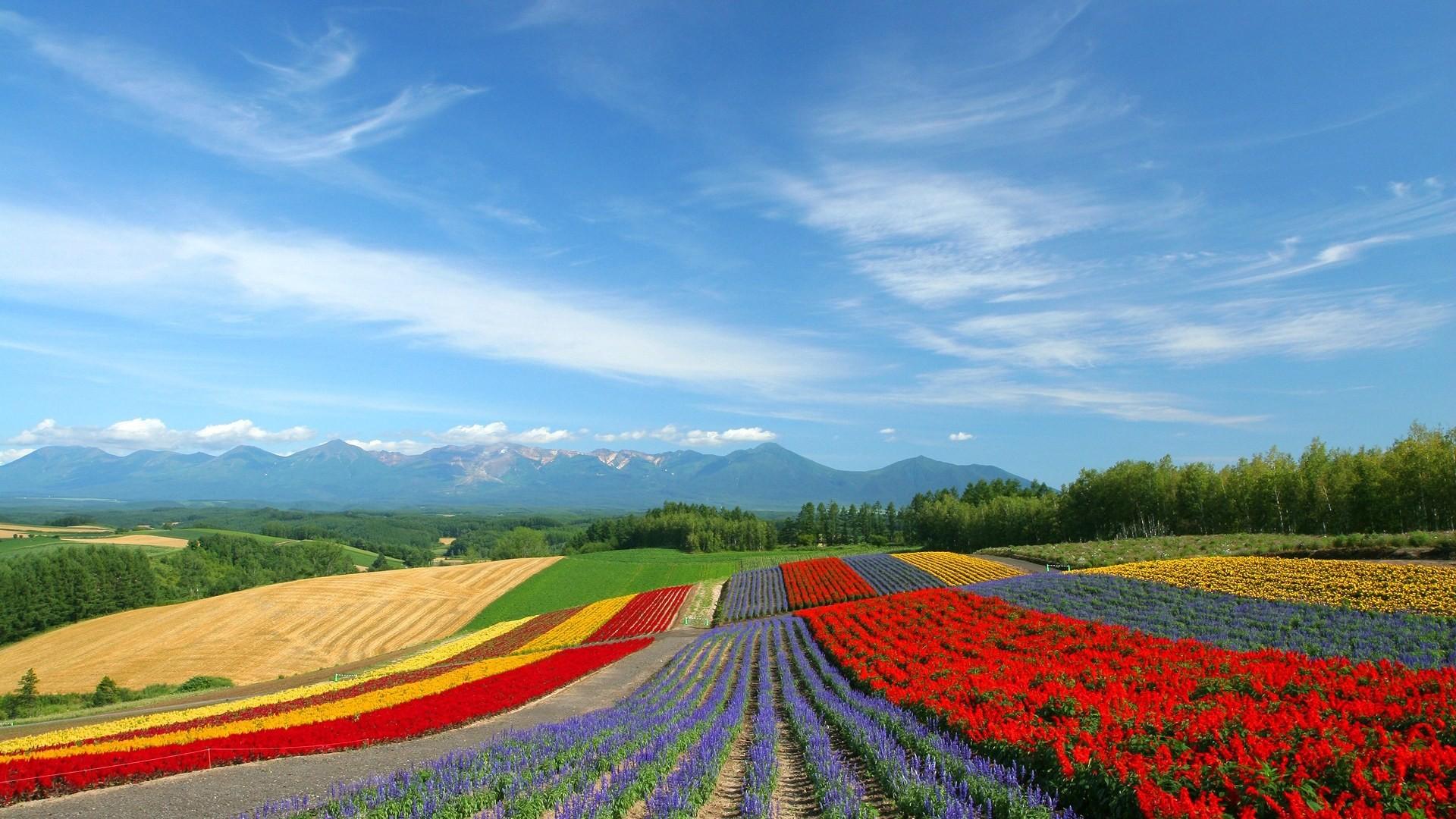 Japan Hokkaido Country Field : Open Field Under Sky1920 .