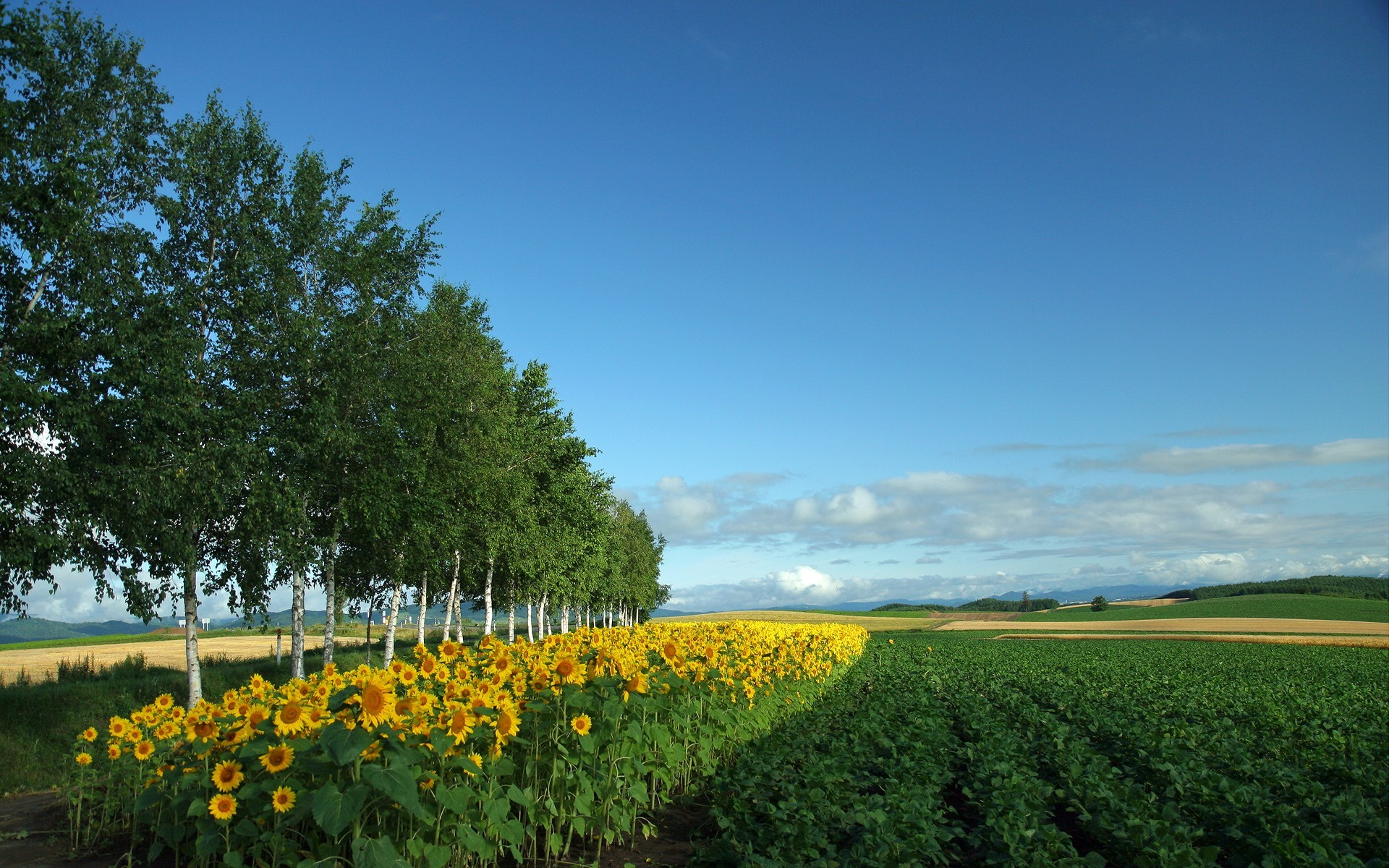 Japan Hokkaido Country Field : Open Field Under Sky 1920*1200 NO.10  Wallpaper