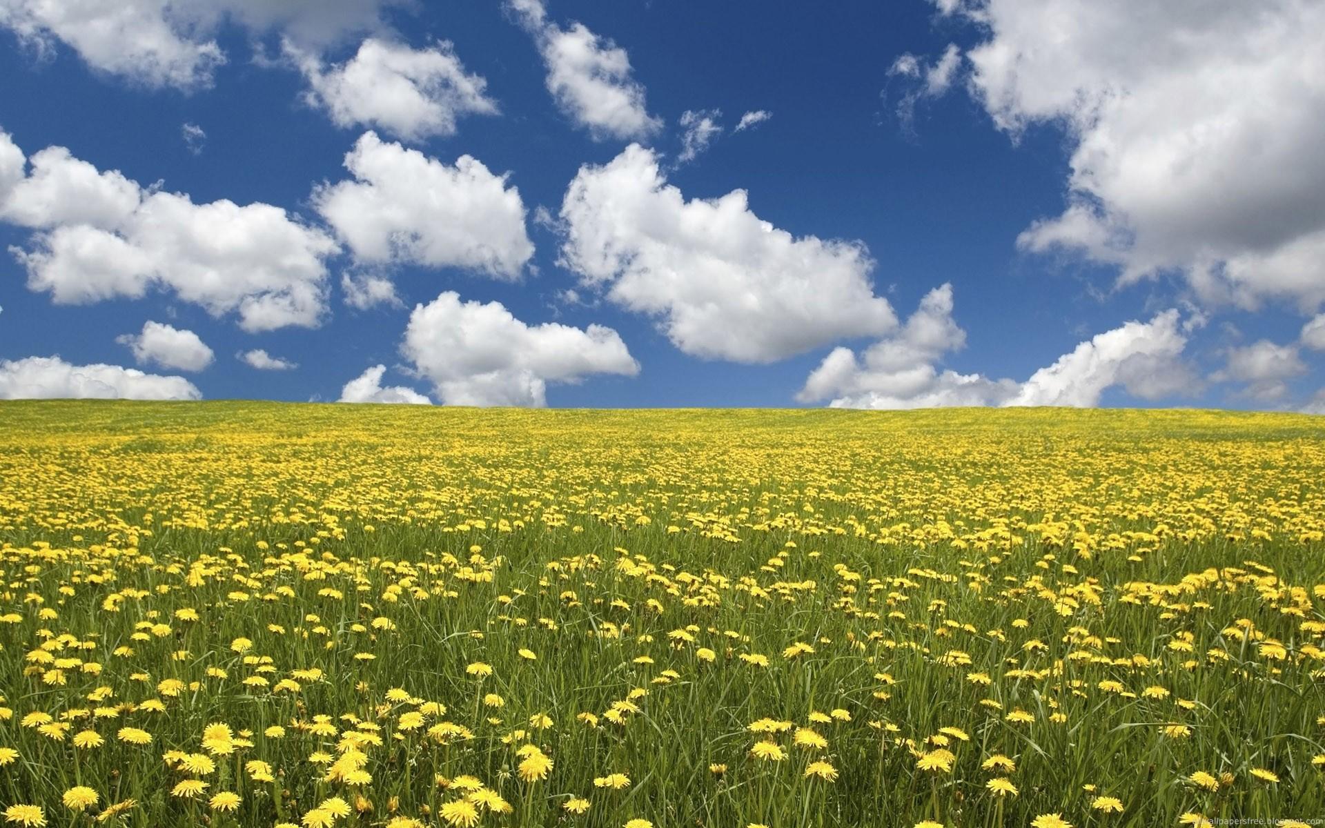 Field Of Colorful Flowers Wallpaper field of flowers desktop wallpaper