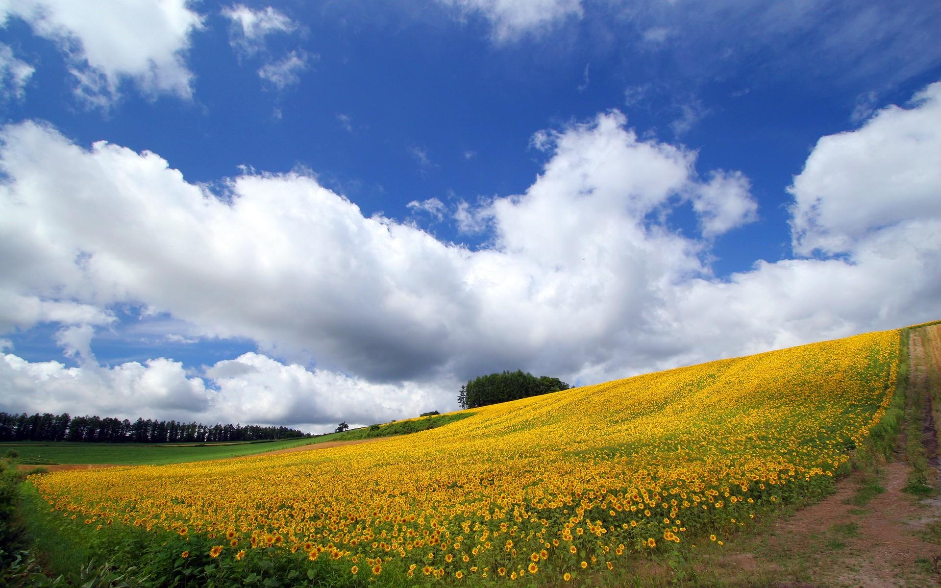 Japan Hokkaido Country Field : Open Field Under Sky .