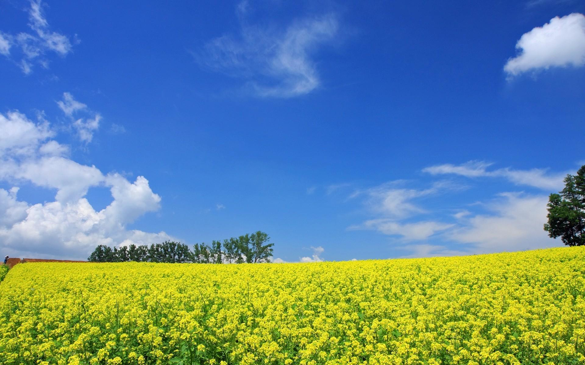 Japan Hokkaido Country Field : Open Field Under Sky 1920*1200 NO.34  Wallpaper