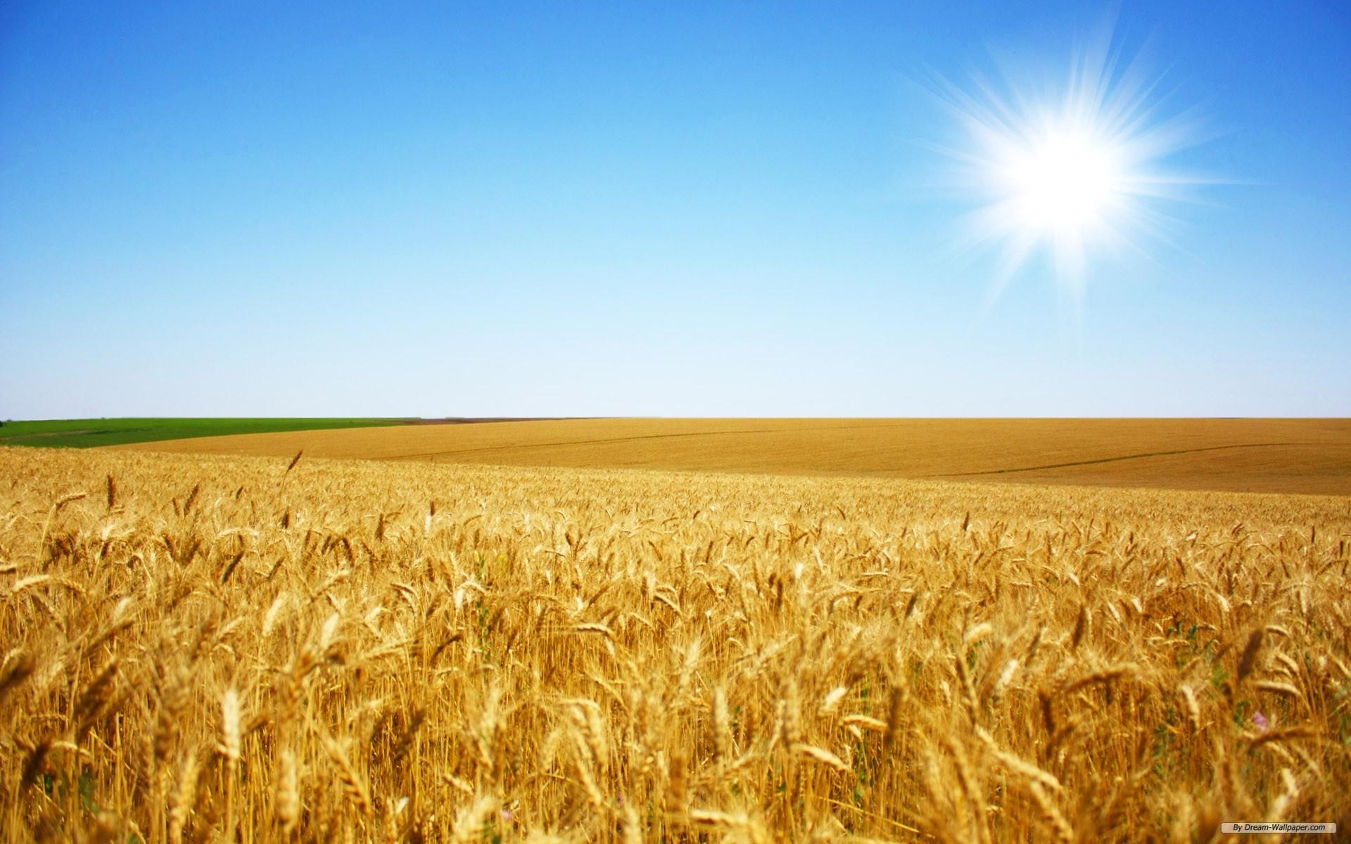 wallpaper – Wheat Field 1 wallpaper – wallpaper – Index 1 .