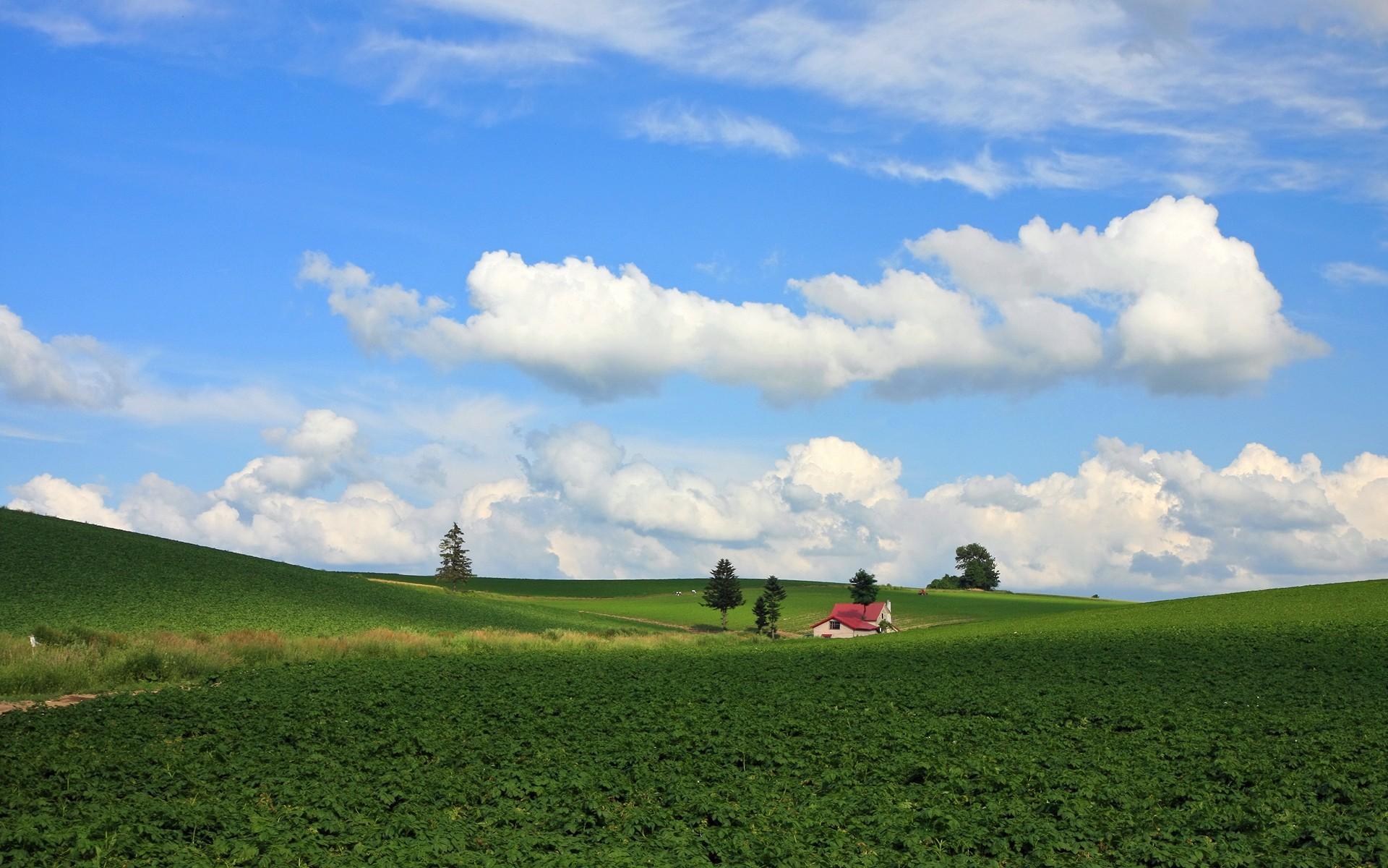 Japan Hokkaido Country Field : Open Field Under Sky 1920*1200 NO.37  Wallpaper