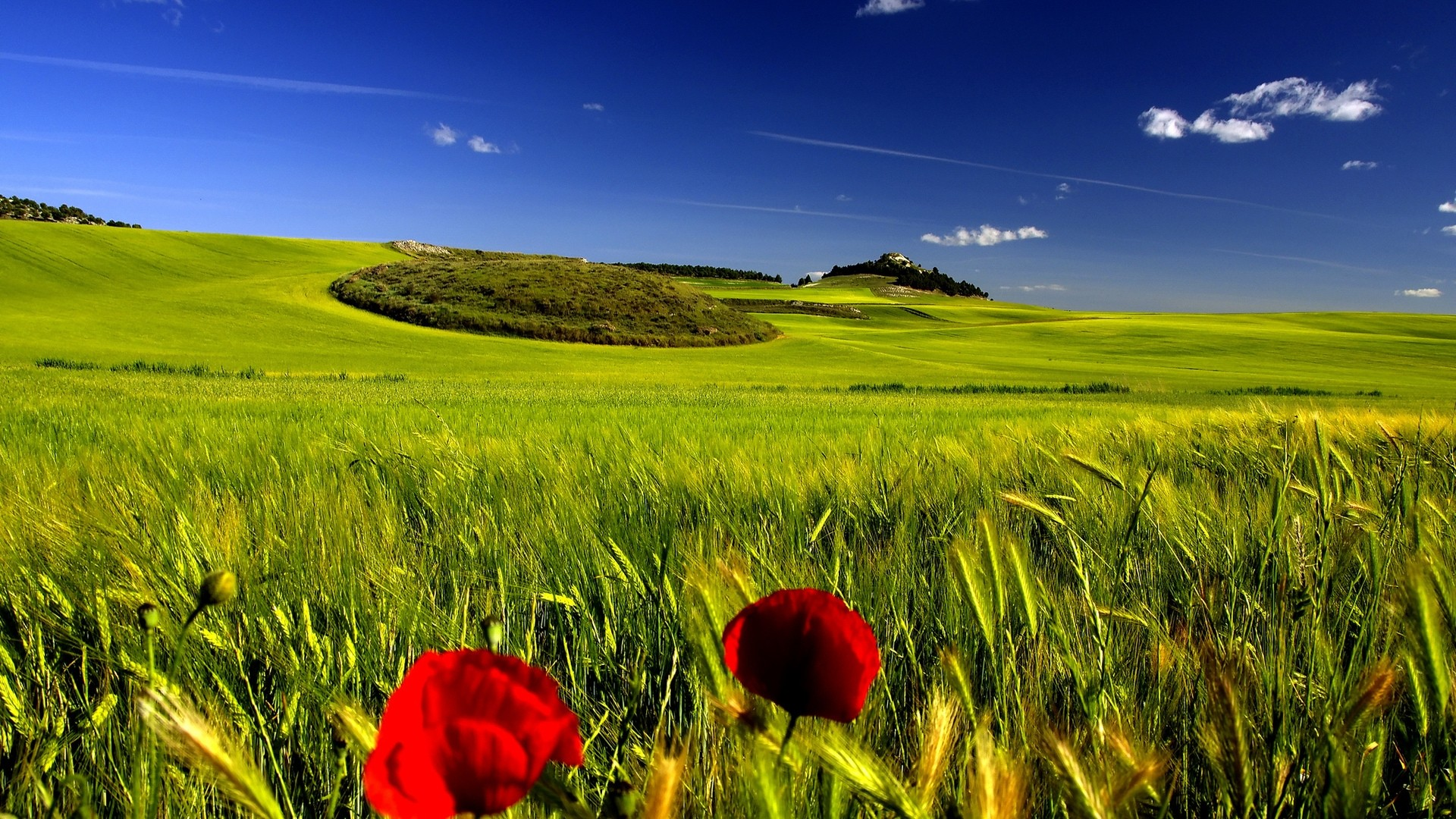Large-Open-Field-with-Clear-Skies-HD-Wallpaper