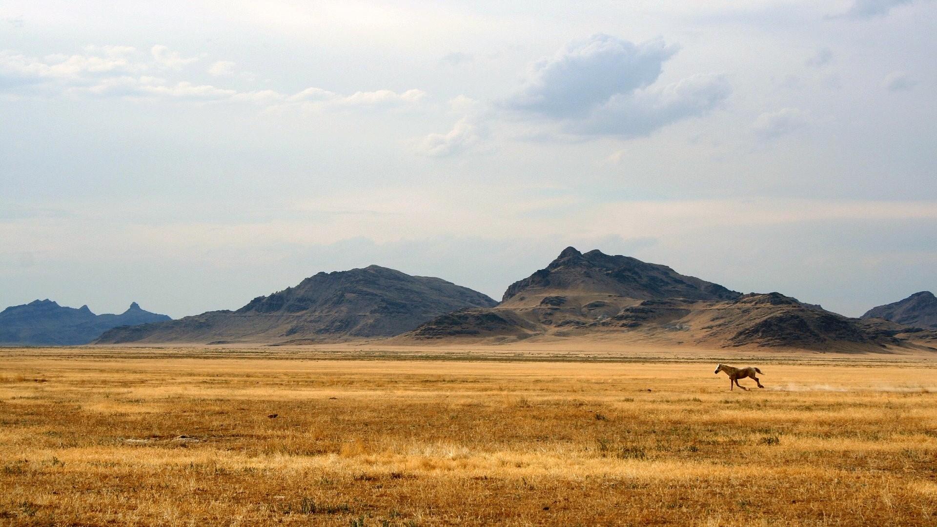 Wild Horse Open Field Running Widescreen