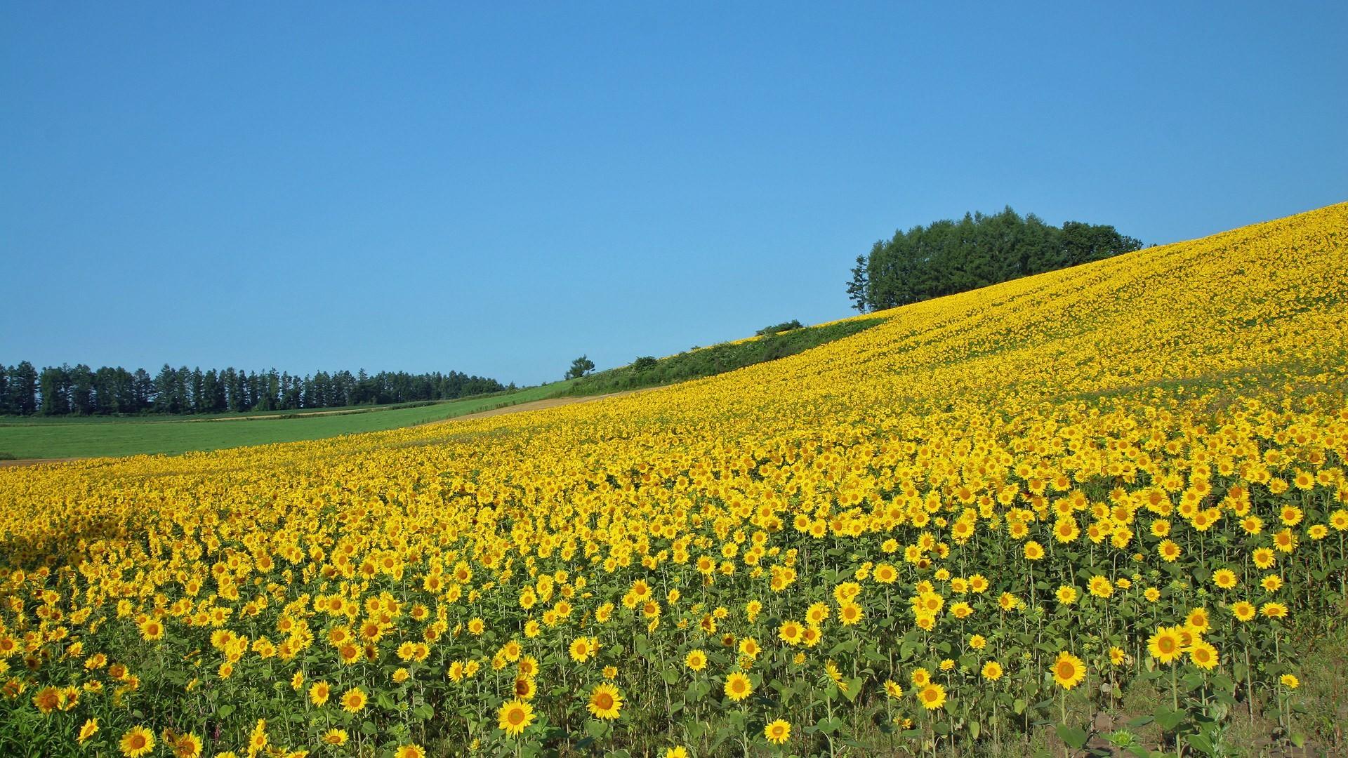Japan Hokkaido Country Field : Open Field Under Sky1920x1080第24 Wallpaper