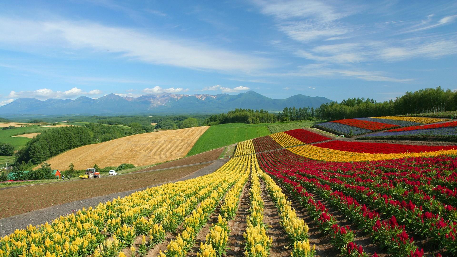 Japan Hokkaido Country Field : Open Field Under Sky1920x1080第22 Wallpaper