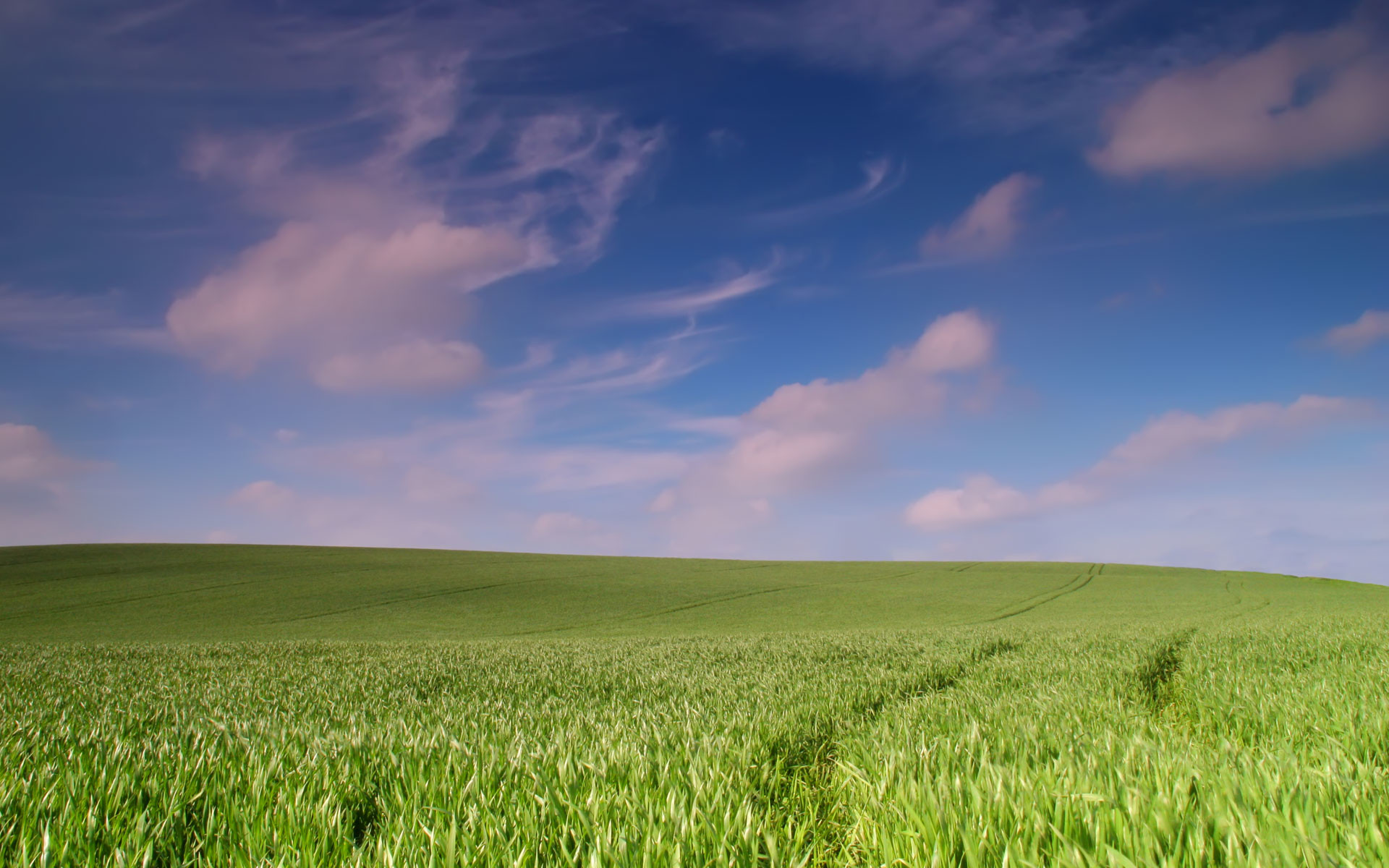 Spring Wheat Field Wallpapers