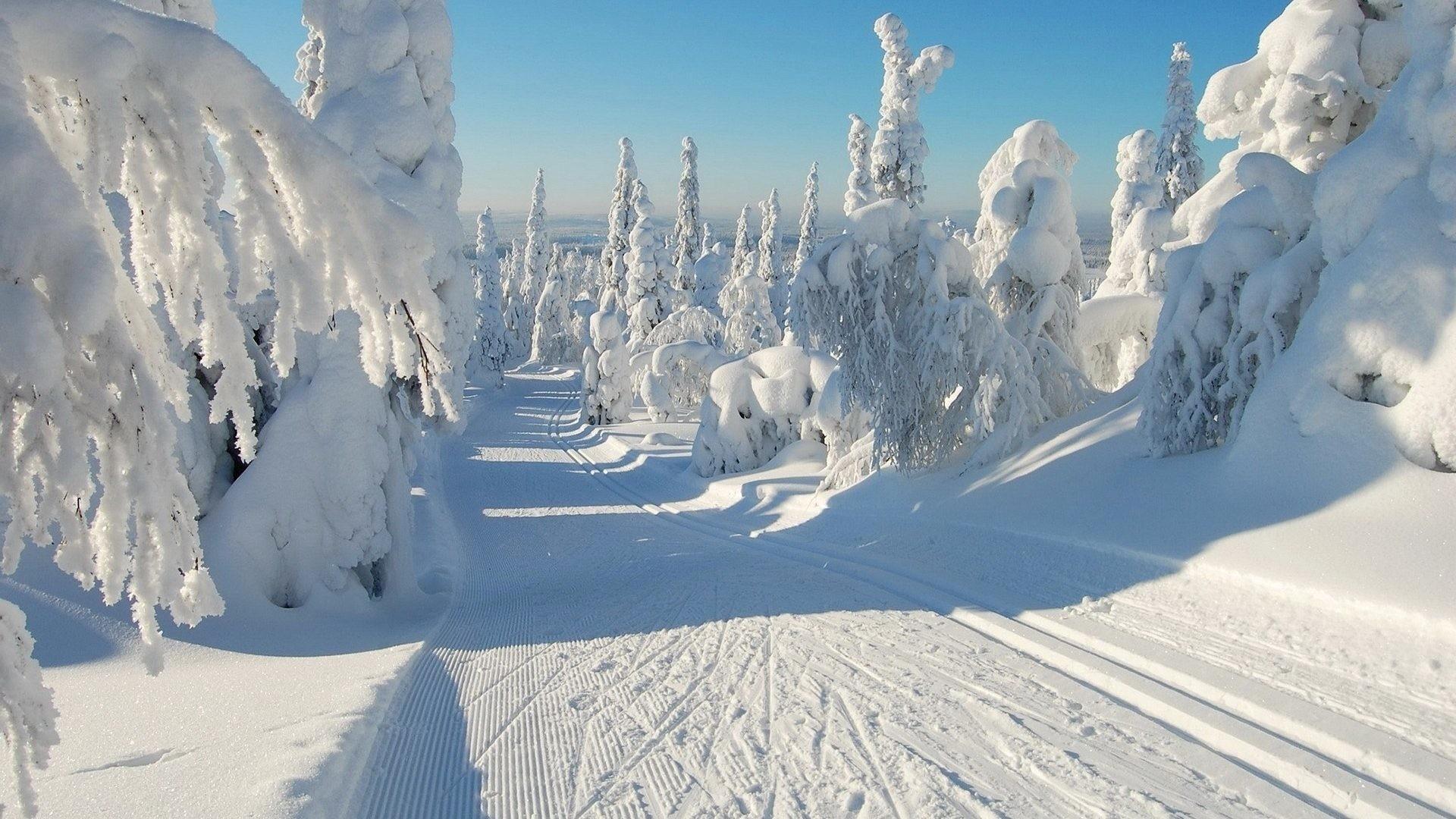 Natue Snowy Snow Scene Winter White Path Trees Desktop Wallpaper