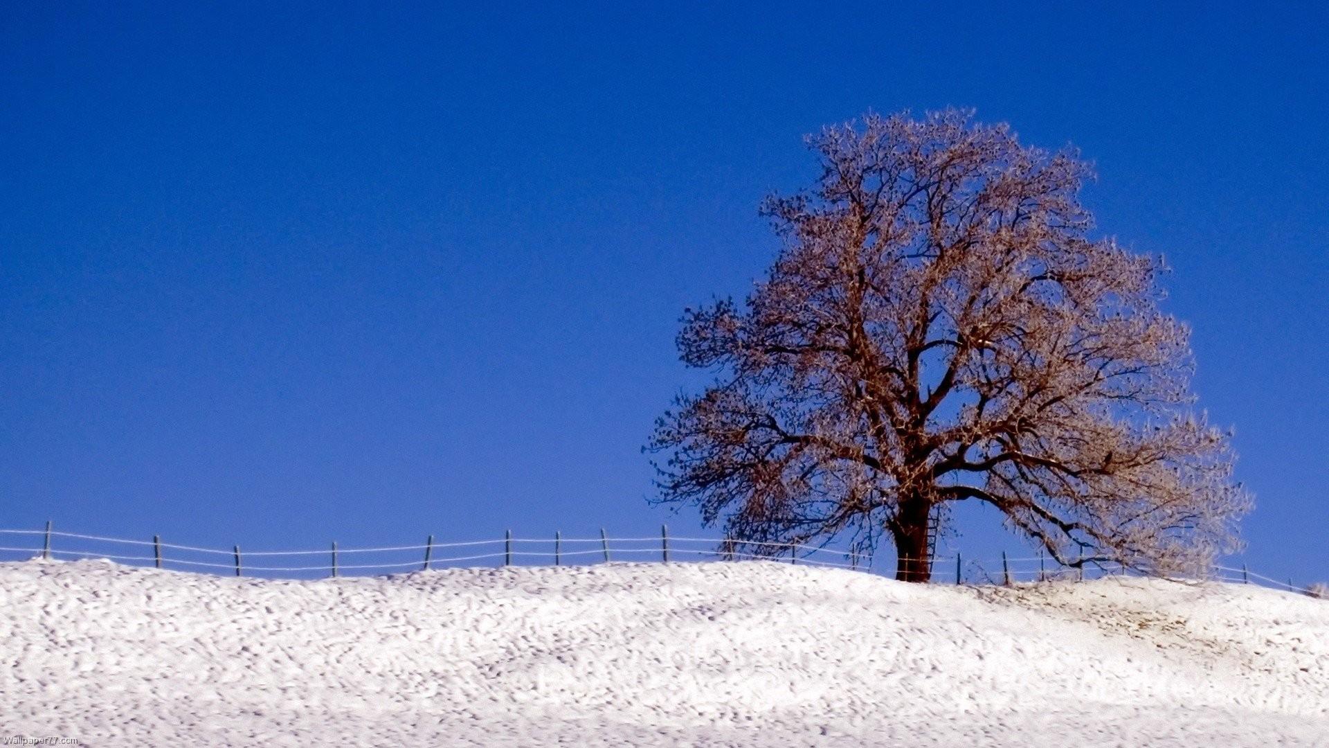 Winter Snow Scenes 432880 …