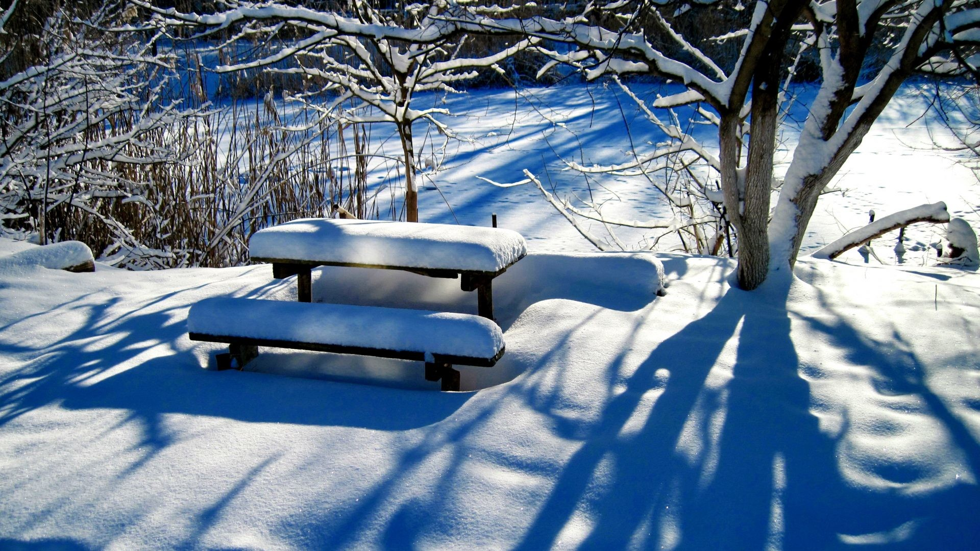 Winter Tag – Winter Sunny Quiet Trees Forest Rest Frost Lovely Bench  Shadows Beautiful Snow Park