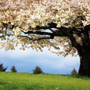 Spring Wallpaper and Screensavers
