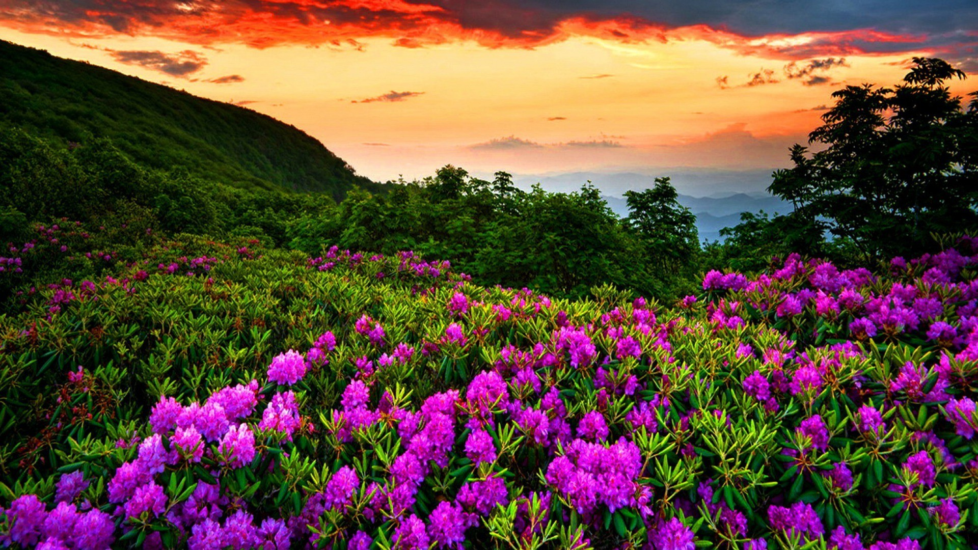 Most Wanted Beautiful Spring Wallpapers