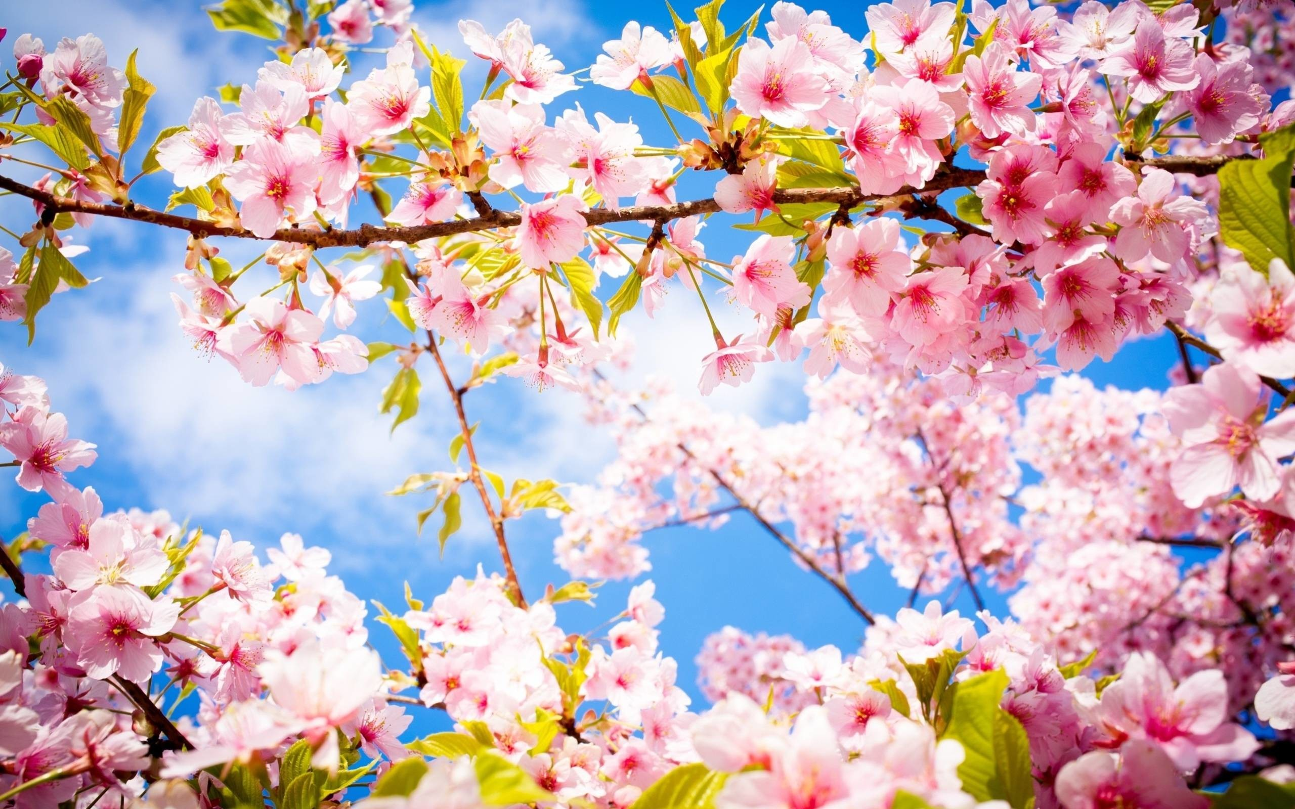 Wallpapers For > Beautiful Spring Flowers Wallpapers