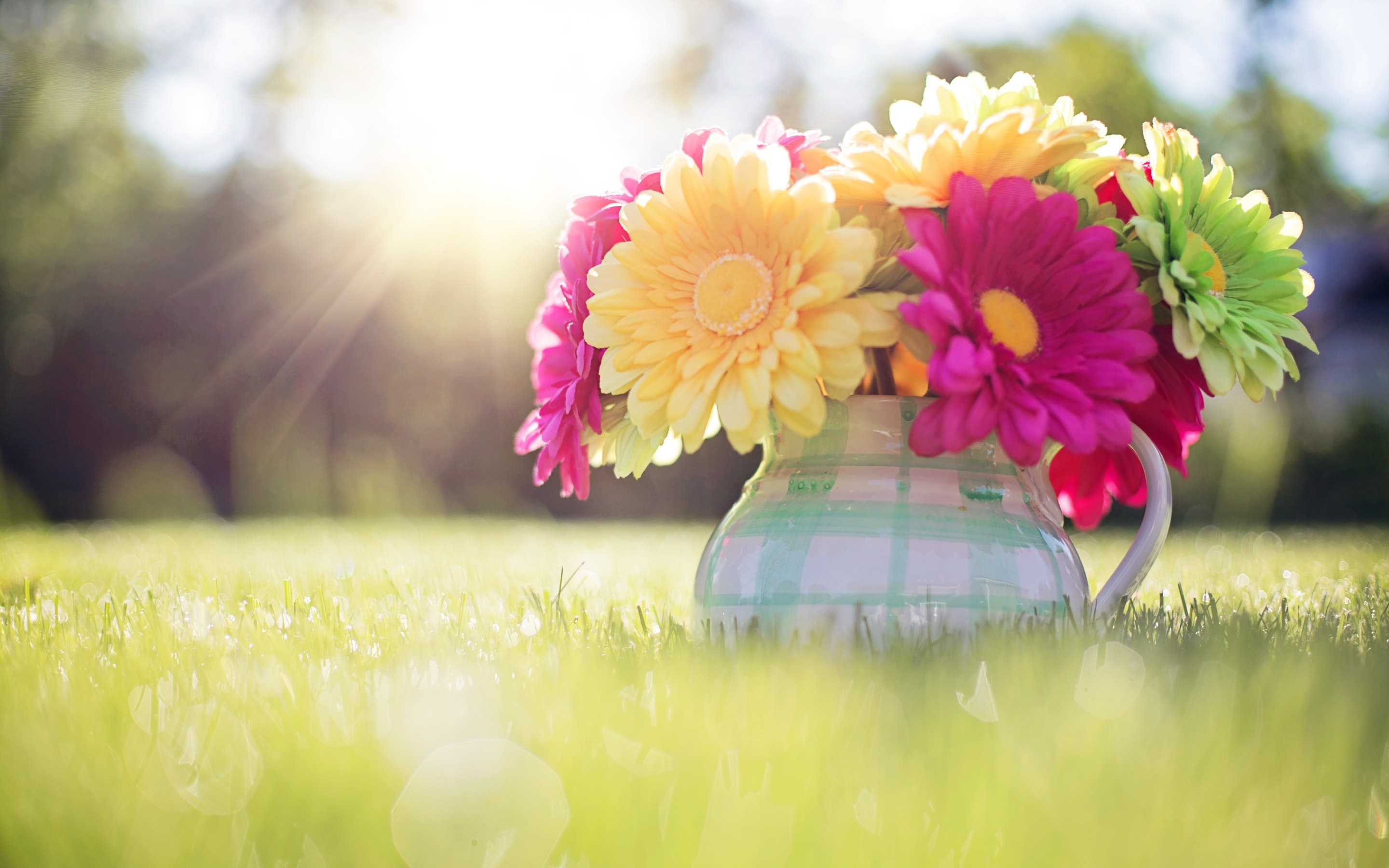 colored flowers image hd