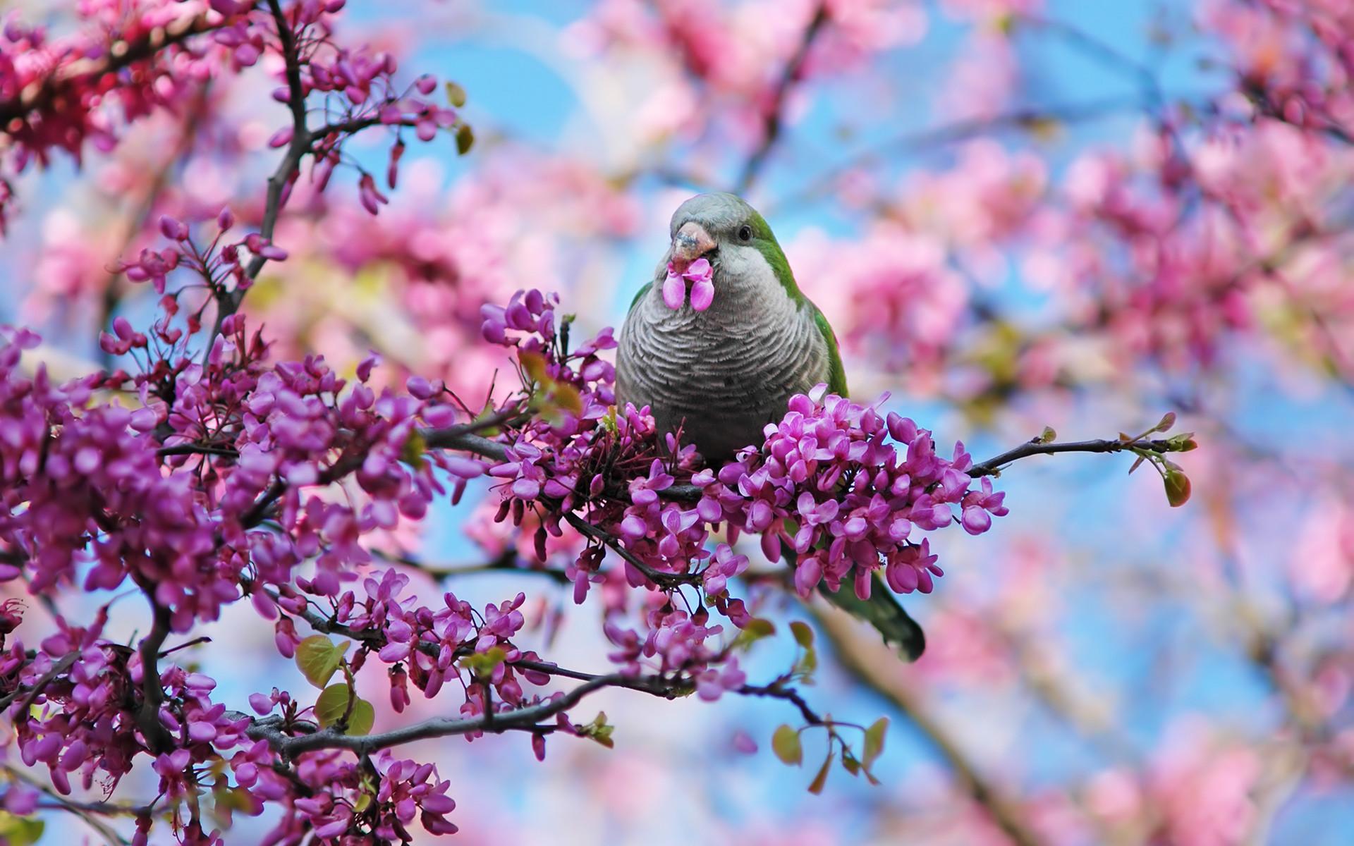 spring wallpaper bird. Â«Â«