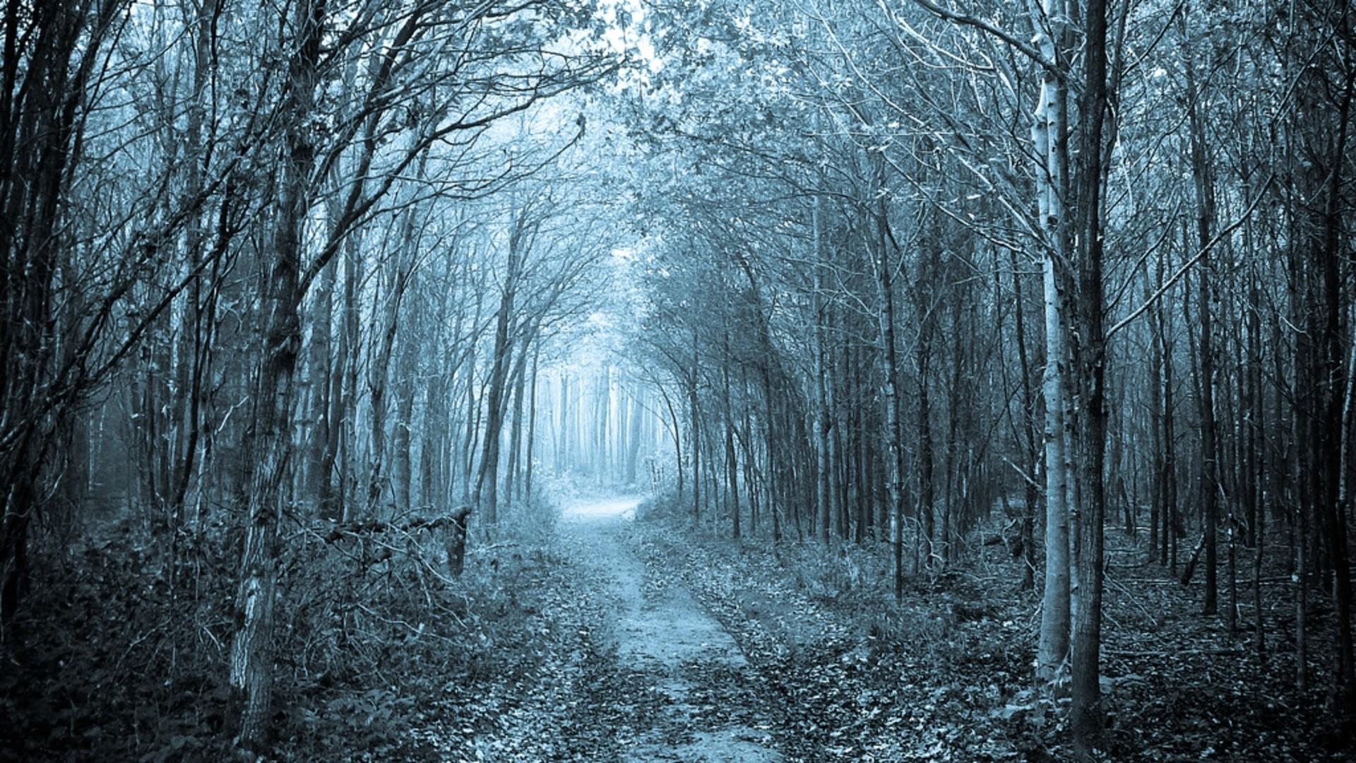 Path Through The Forest Wallpaper Background #em1t6y px 1.81 MB  Nature & Landscape