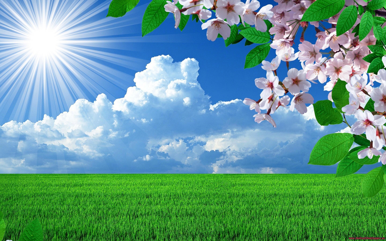 HD Nature Spring Flowers Landscapes Trees Sky Landscape Background Images  Wallpaper